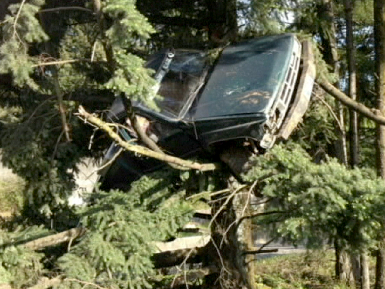 Oregon Driver Cited For Parking Car In Tree