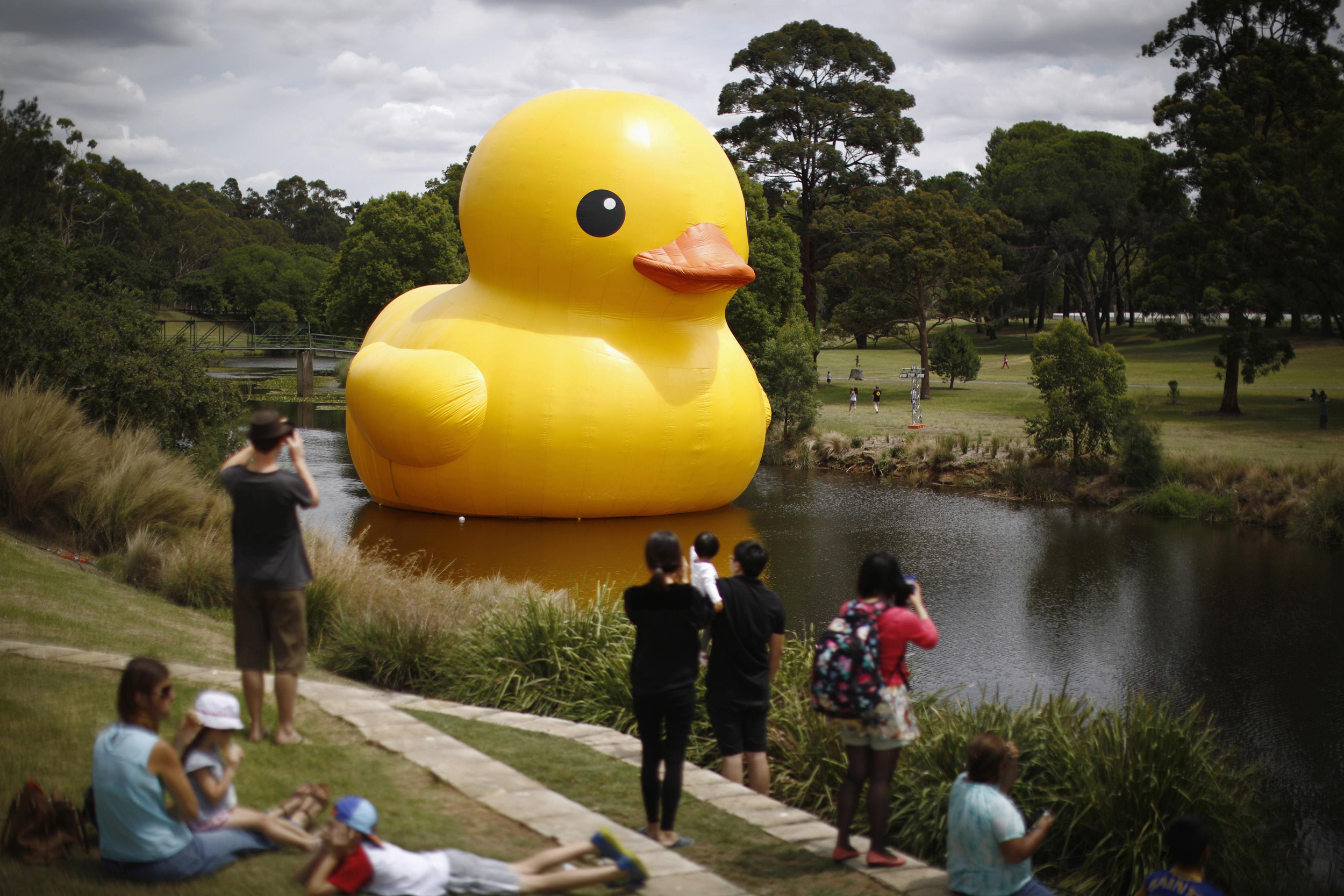 Giant Rubber Duck Pops Up In Australia Photos