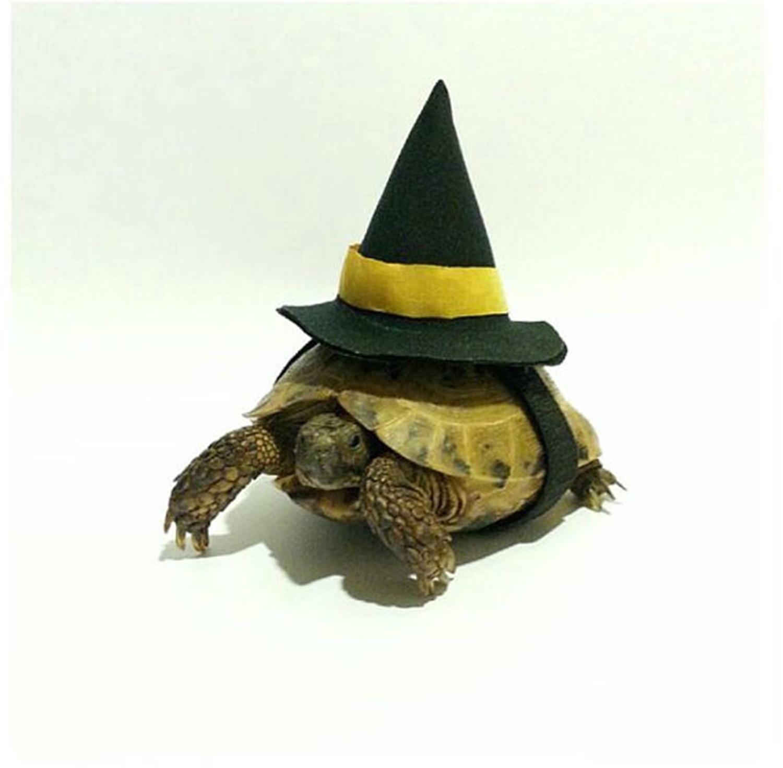 27 Of The Funniest Pet Halloween Costumes