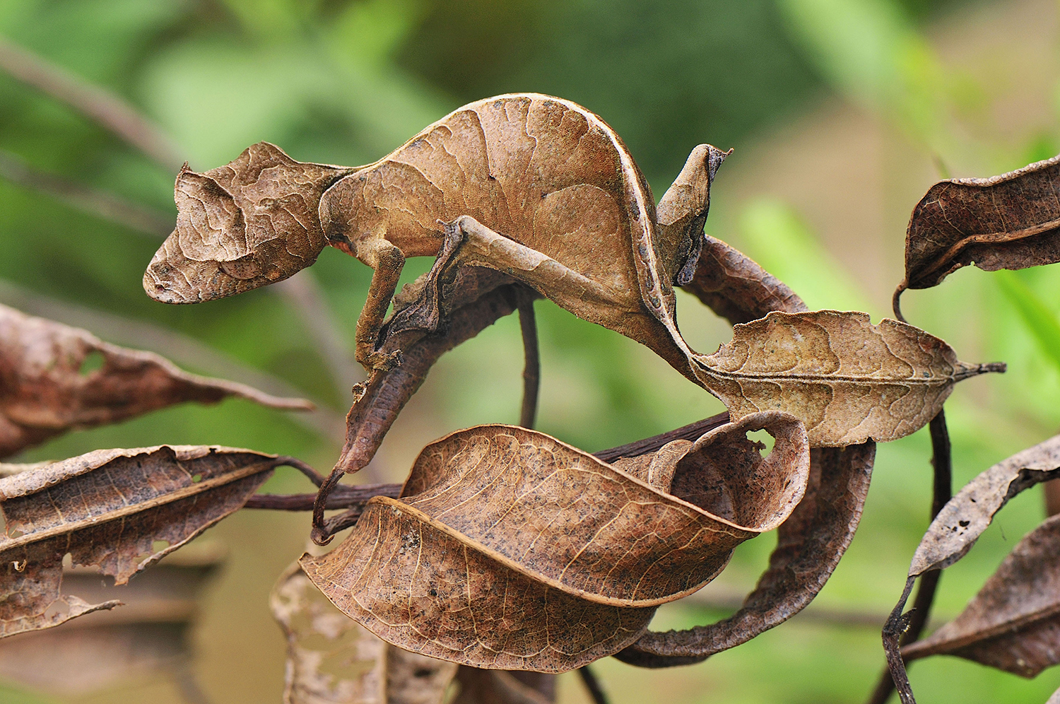Can you find the 9 camouflaged bugs?