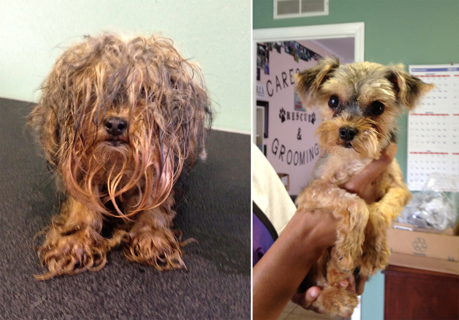 Double take! Doggie makeovers reveal shelter pets' true, happy selves