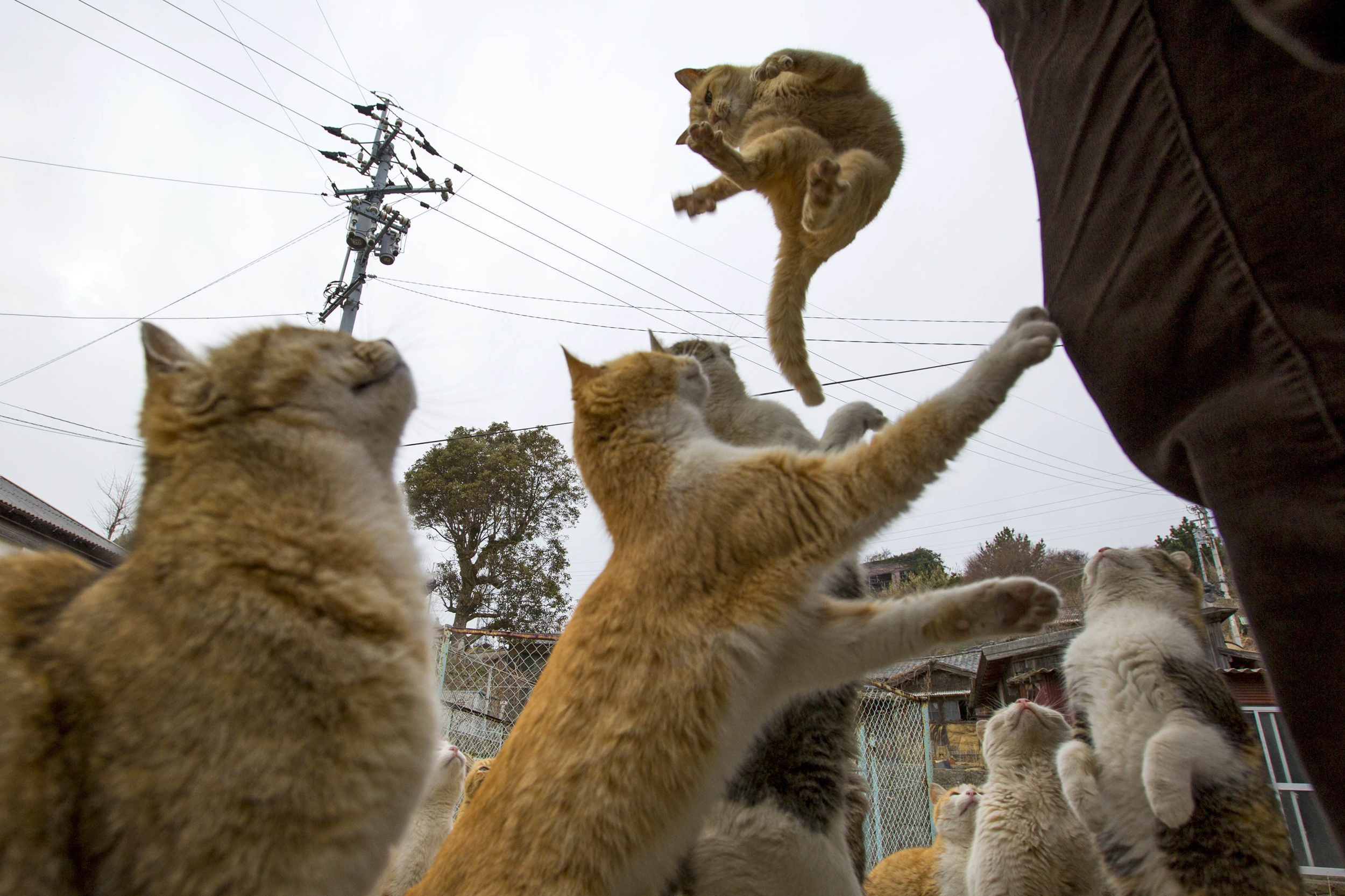 Kitty Paradise or Catastrophe? Felines Swarm Japanese ...