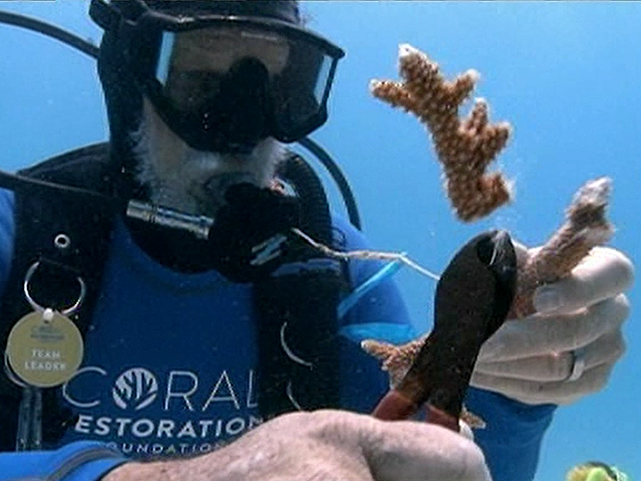 Bleaching Poses a Threat to Hawaii's Coral Reefs, Scientists Say