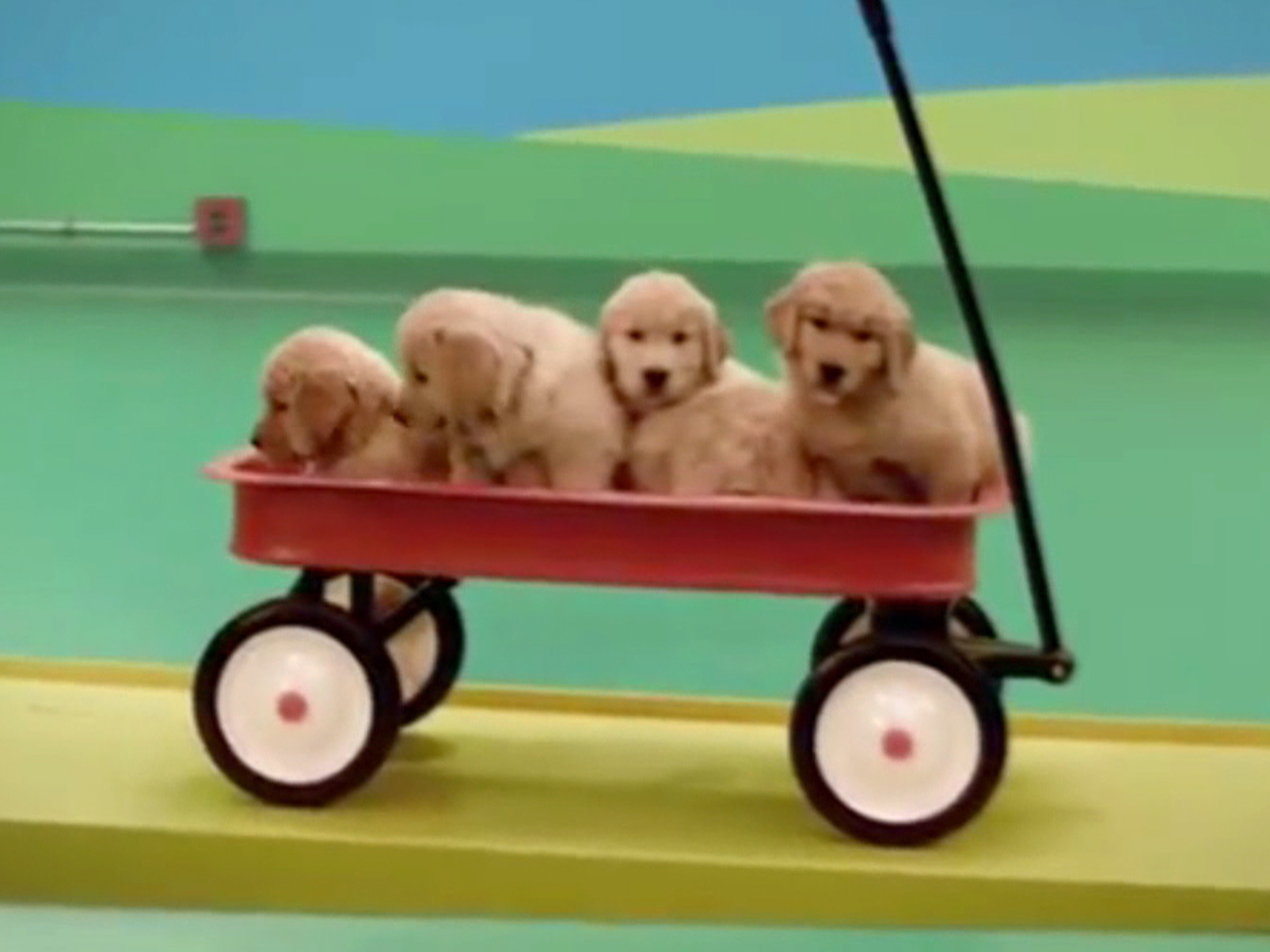 New ad features puppy-operated Rube Goldberg machine