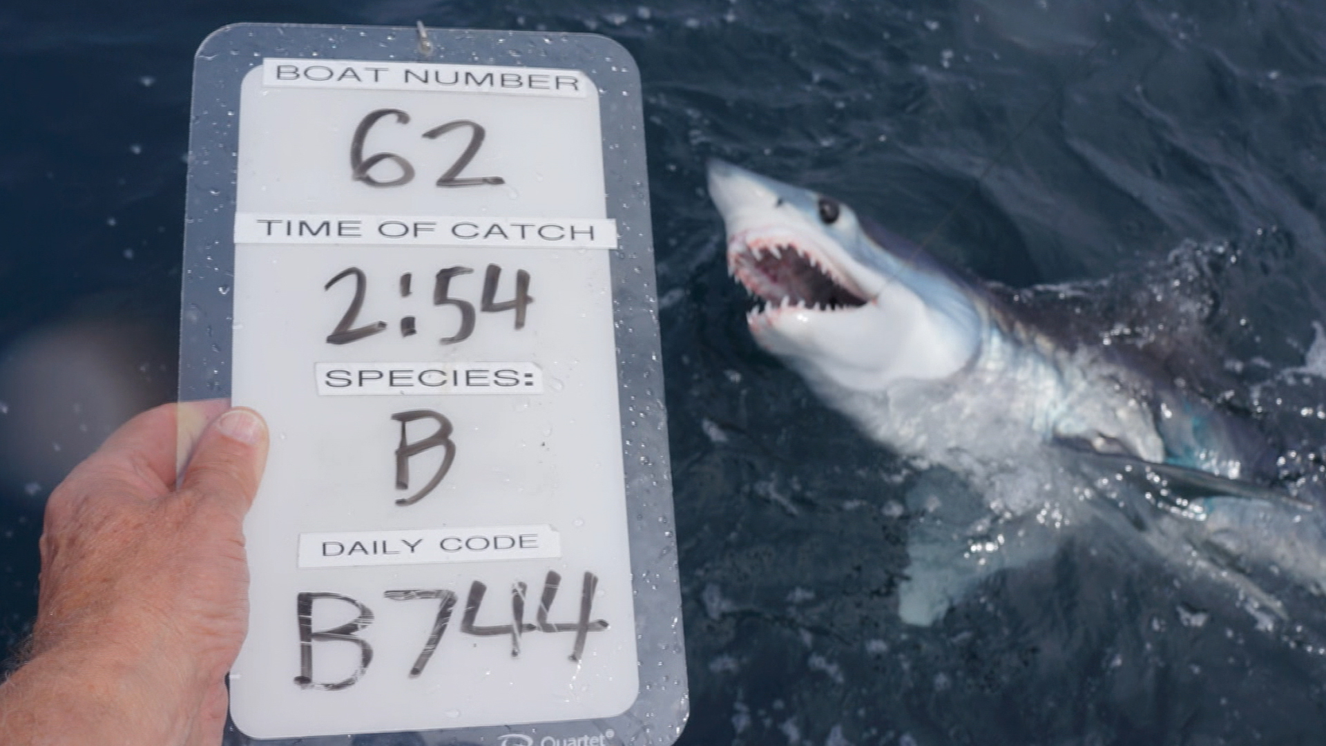 Biologists tag shark to learn about fish with a bad rap
