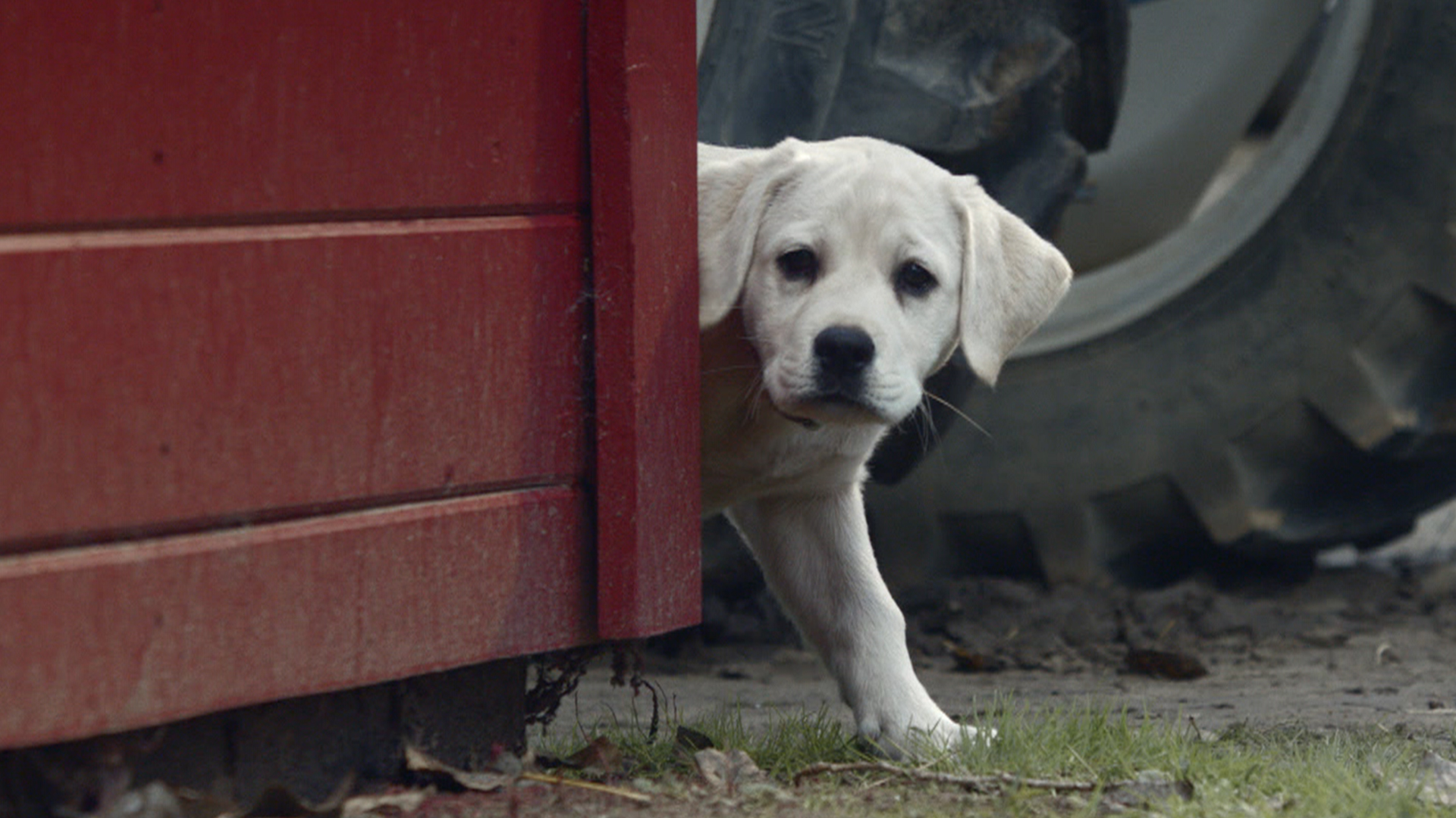 Aww Watch Budweiser S Lost Puppy Super Bowl Ad Today Com