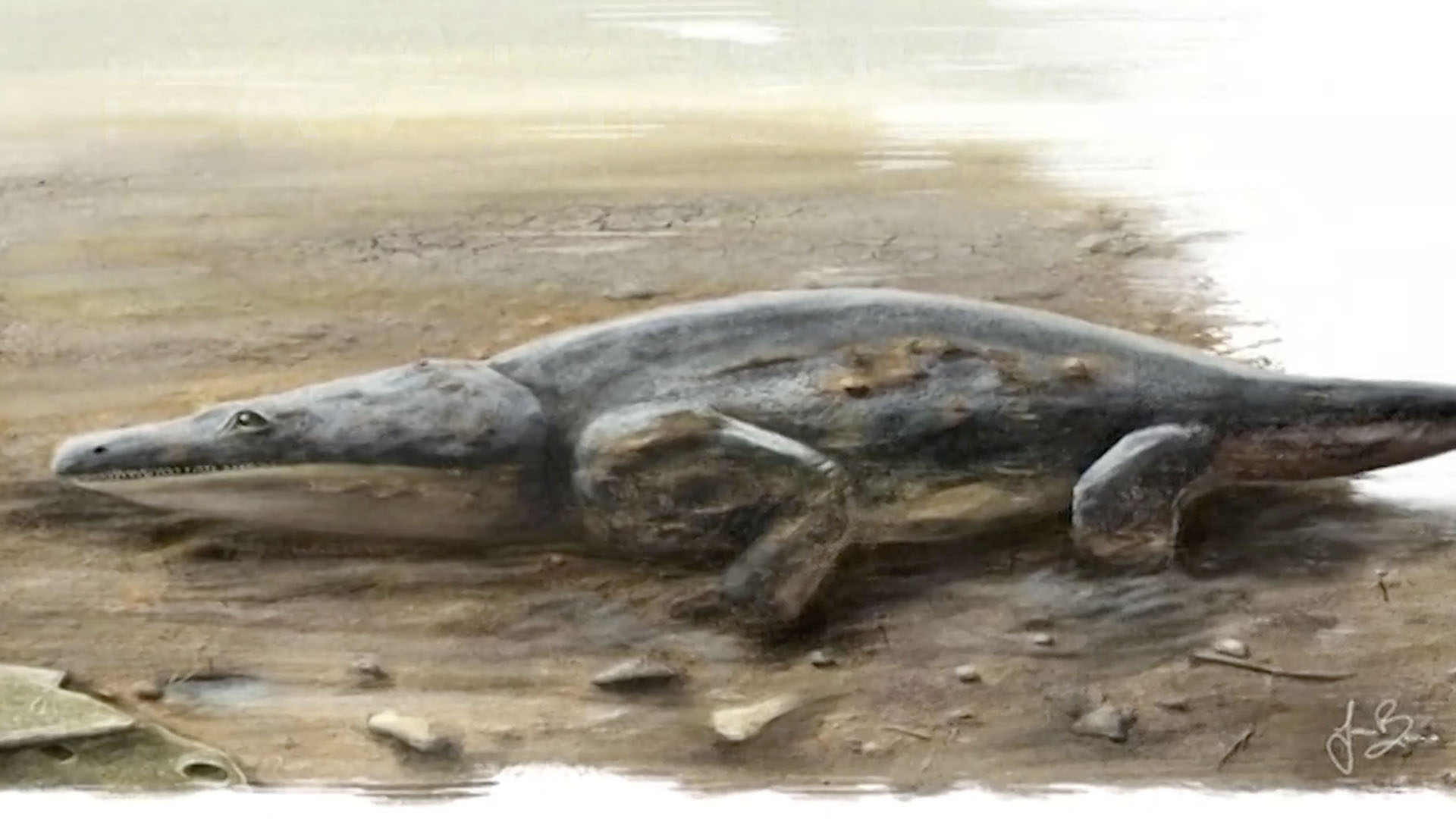 Fossilized Remains of World's Oldest Sea Turtle Discovered