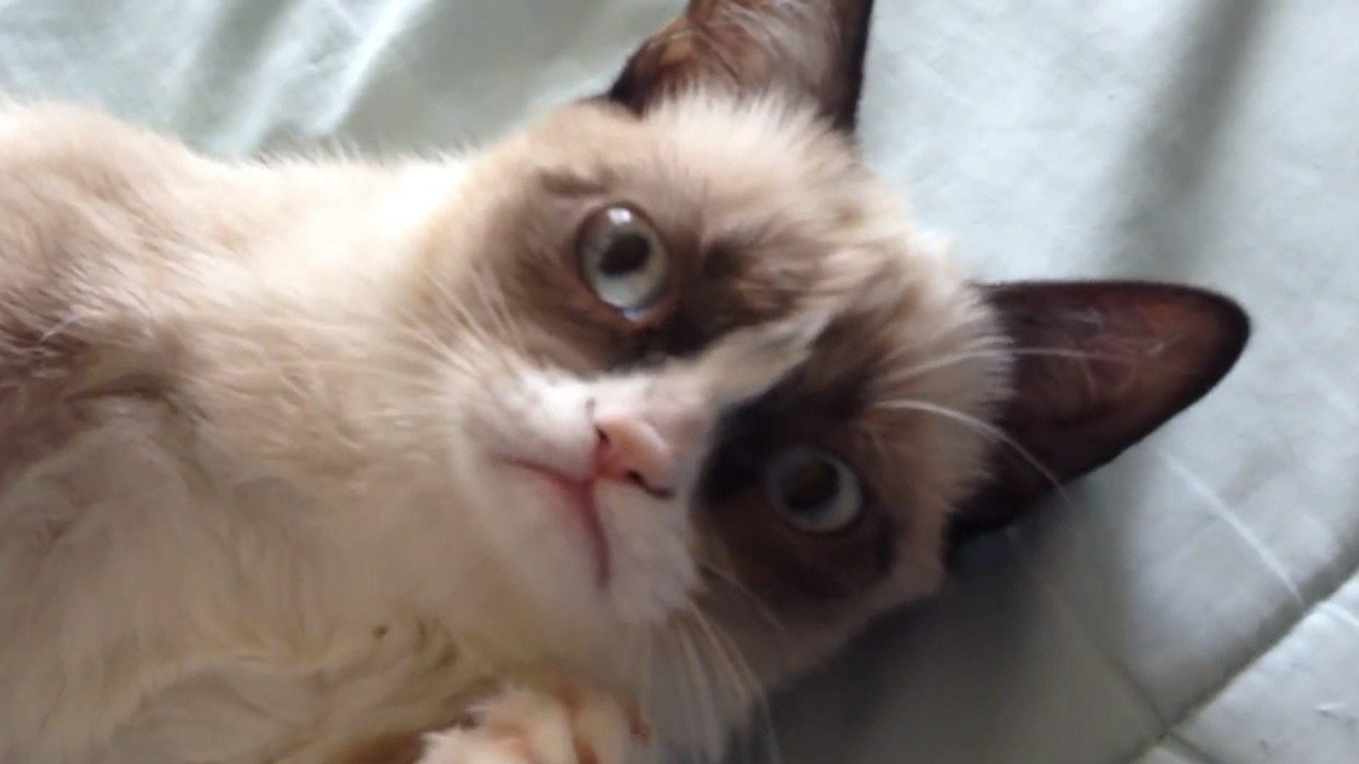 Scientists Explain Why Watching Internet Cat Videos Is Good for You