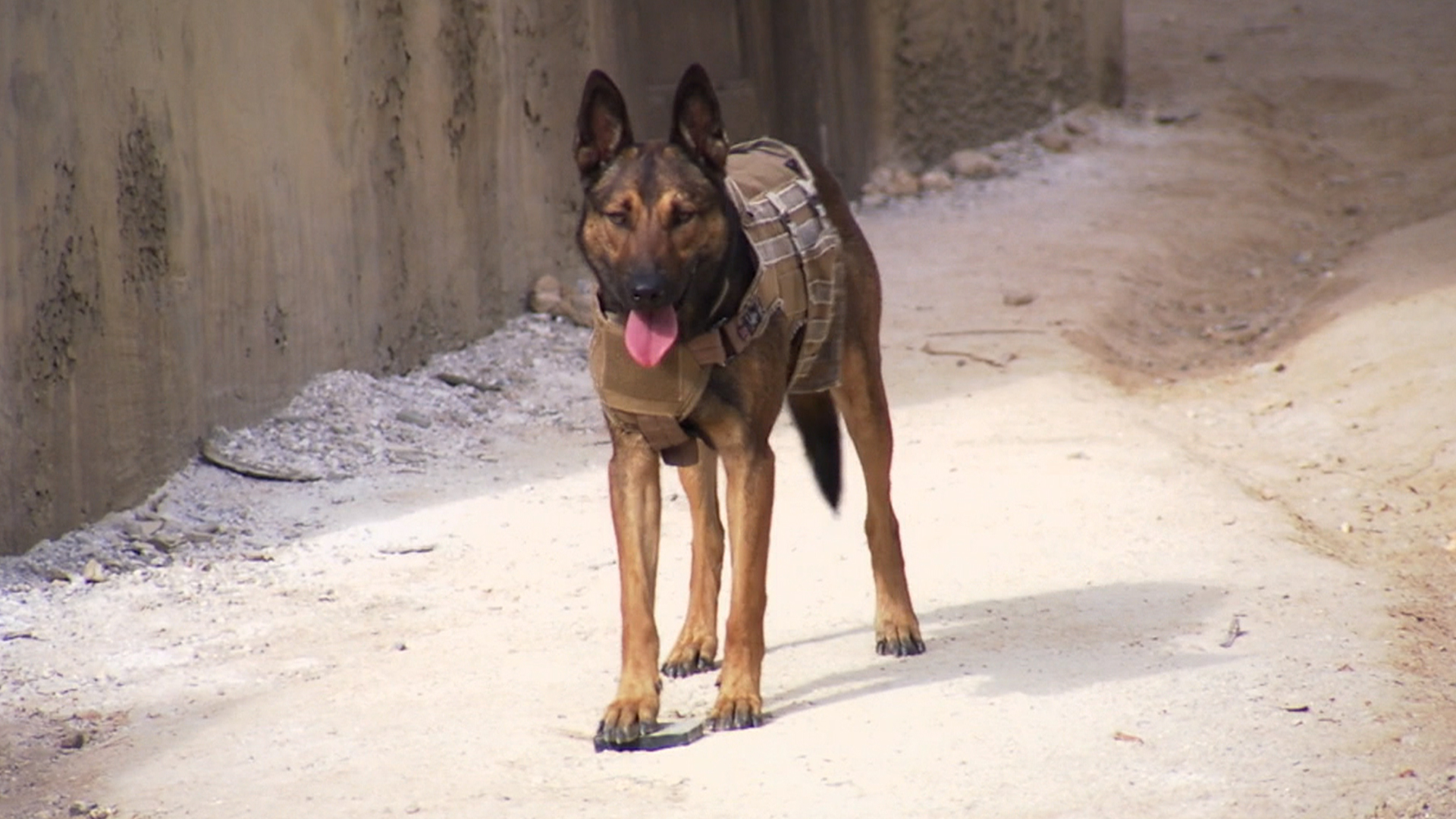 Meet the 4-legged star of new movie 'Max' - TODAY.com