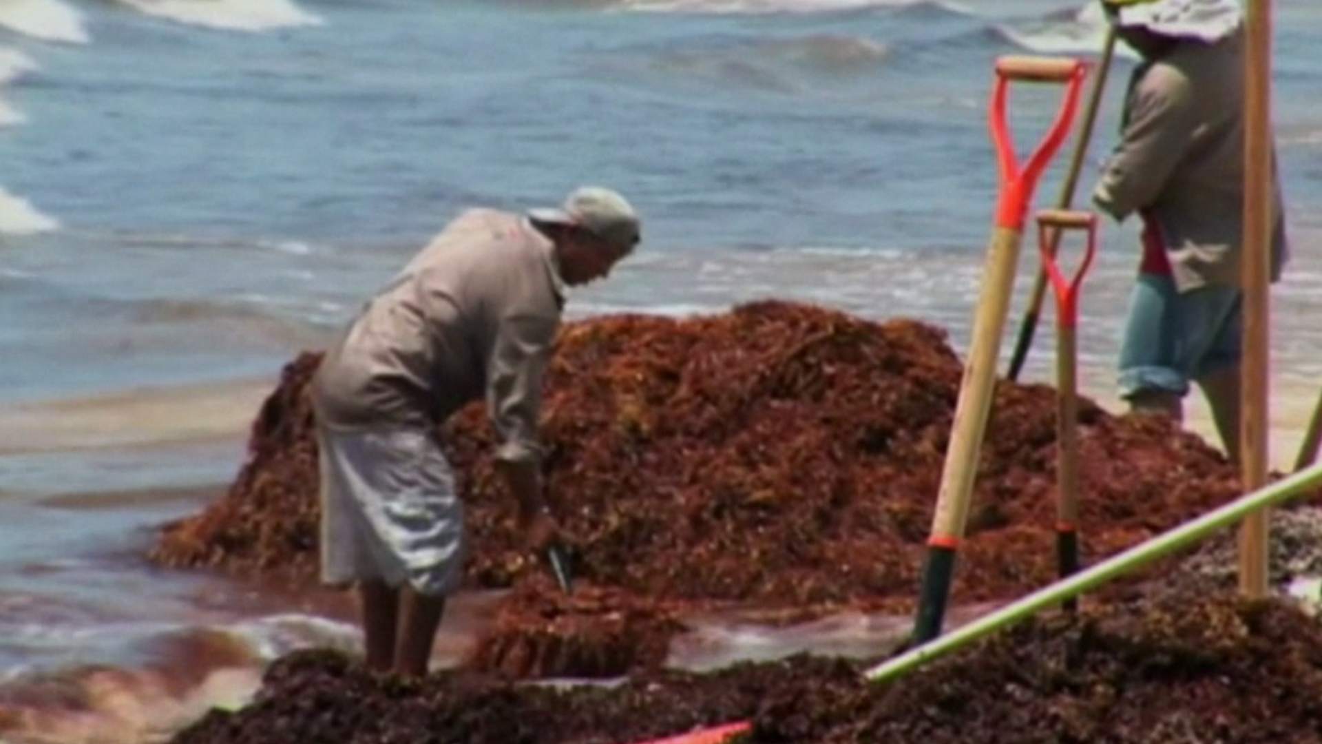 Tons of Seaweed Washing Up on Mexico Beaches