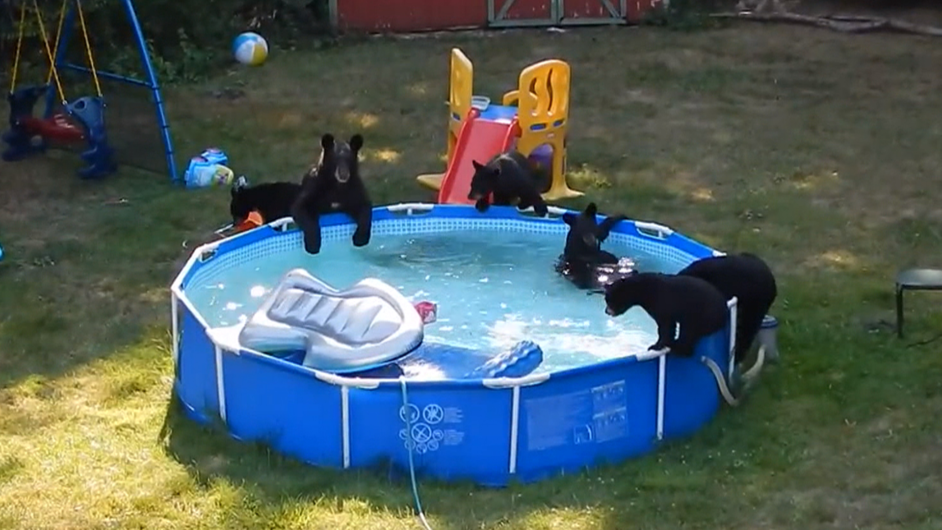 Watch family of bears holds backyard pool party to child for Garden pool party