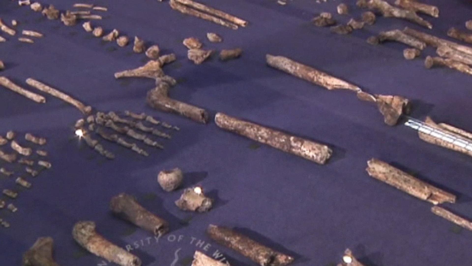 'Mind Blown': Is Human Ancestor Discovery the Long-Sought Missing Link?