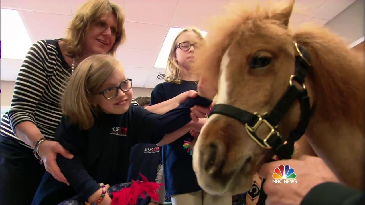 Honor, The Police Pony With a Very Special Job
