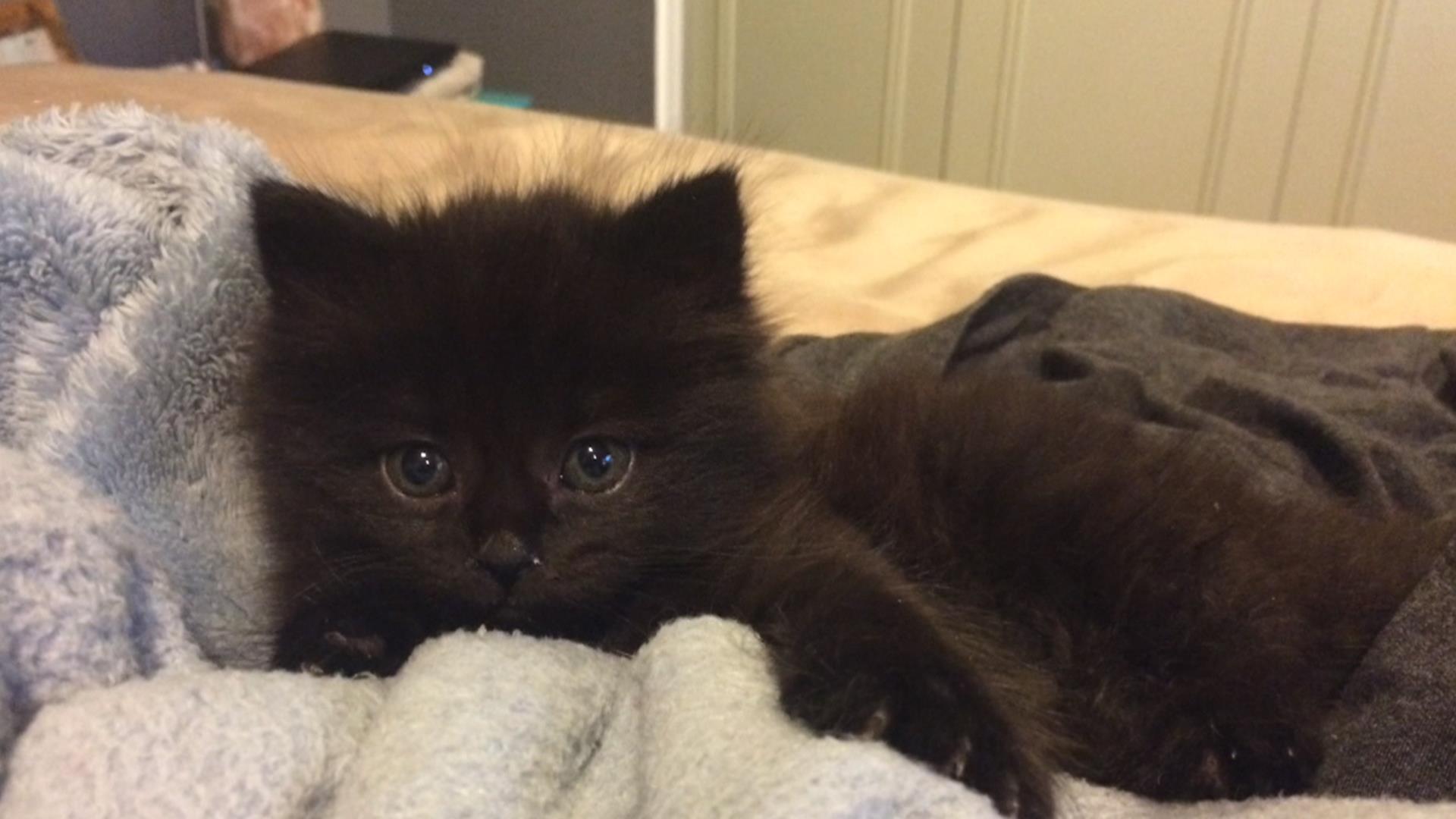 Kitten Rescue Cam