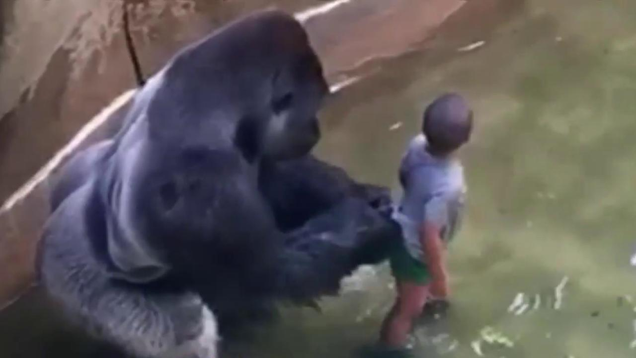 family of boy who fell in harambe exhibit asks for donations to go