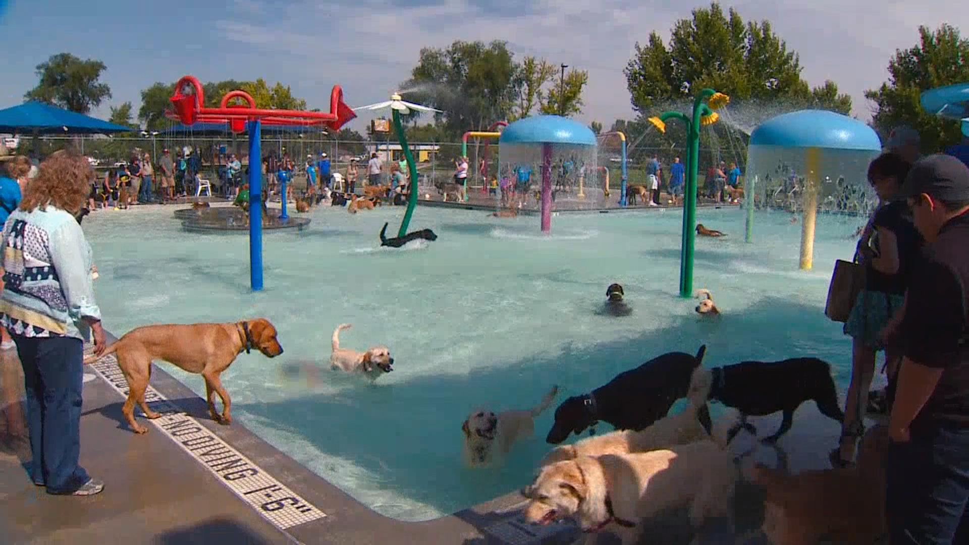 Dog Kennels In Nj