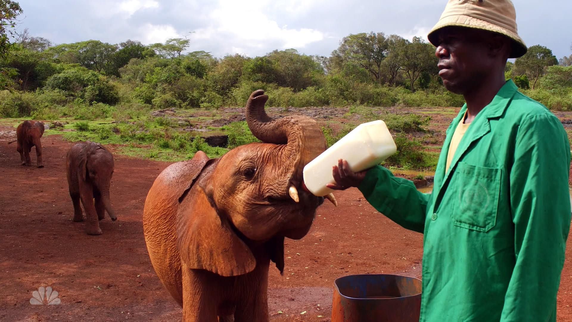 'Sunday Night With Megyn Kelly' Team Travels to Kenya to Report on Efforts to Protect Elephants