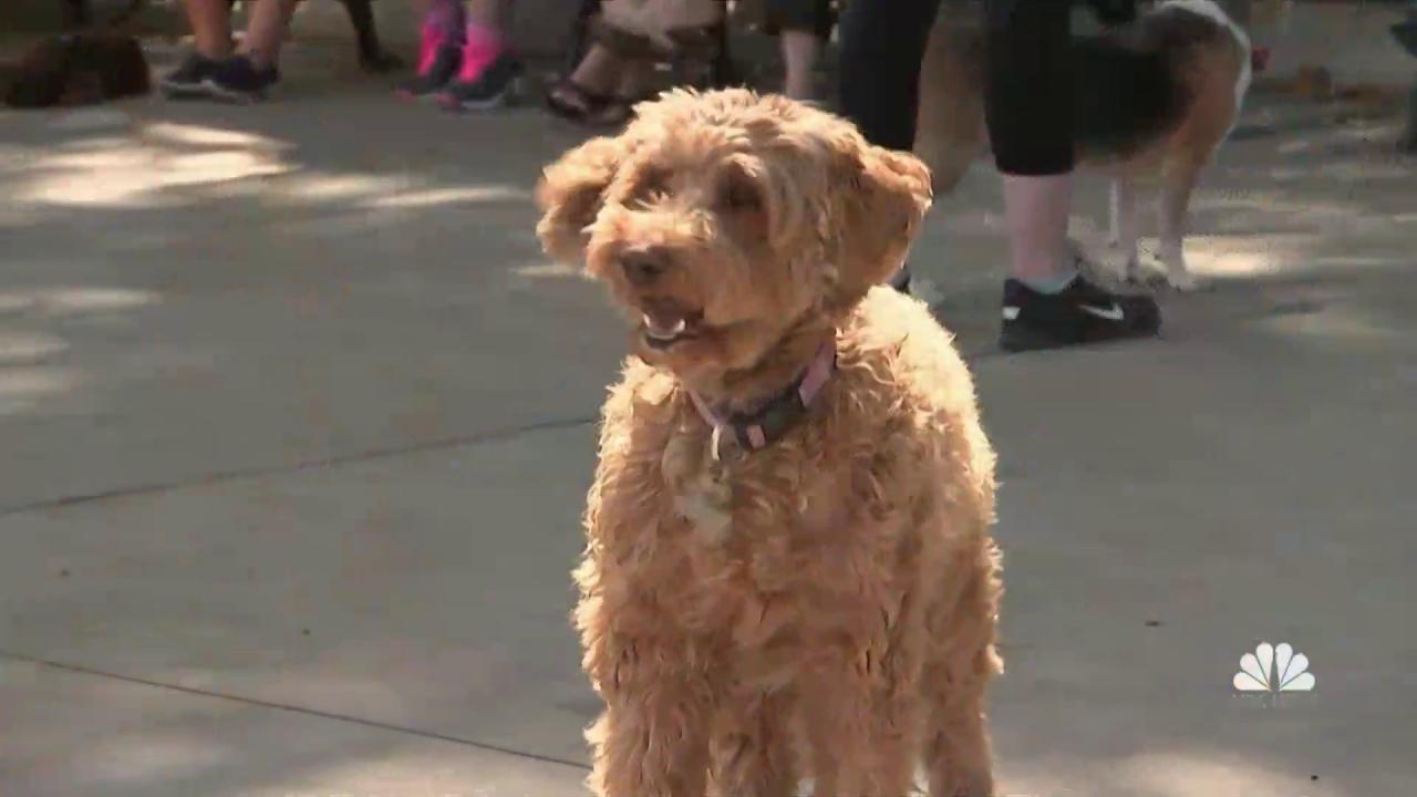 What Makes a Dog a Good Neighbor? - NBC News