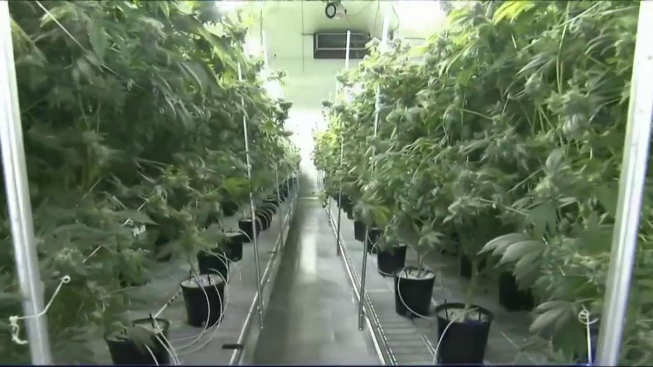 Nevada Marijuana Shortage: State Officials Scramble to Stock
