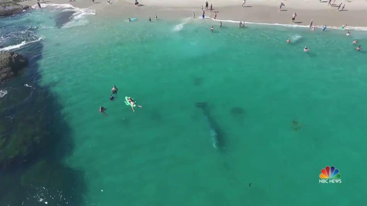 Stunning Video of California Swimmers