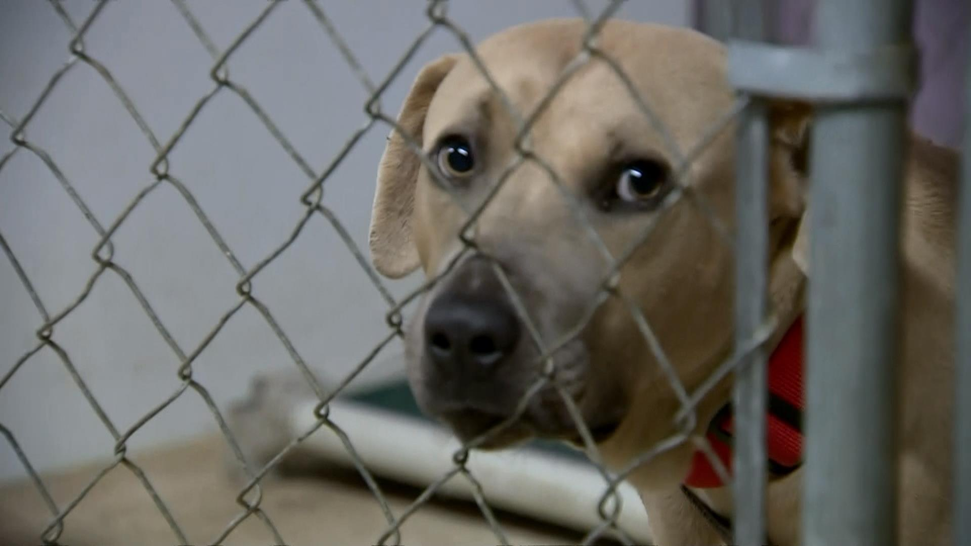 Animal Lovers Shelters Scramble To Save Pets In Wake Of