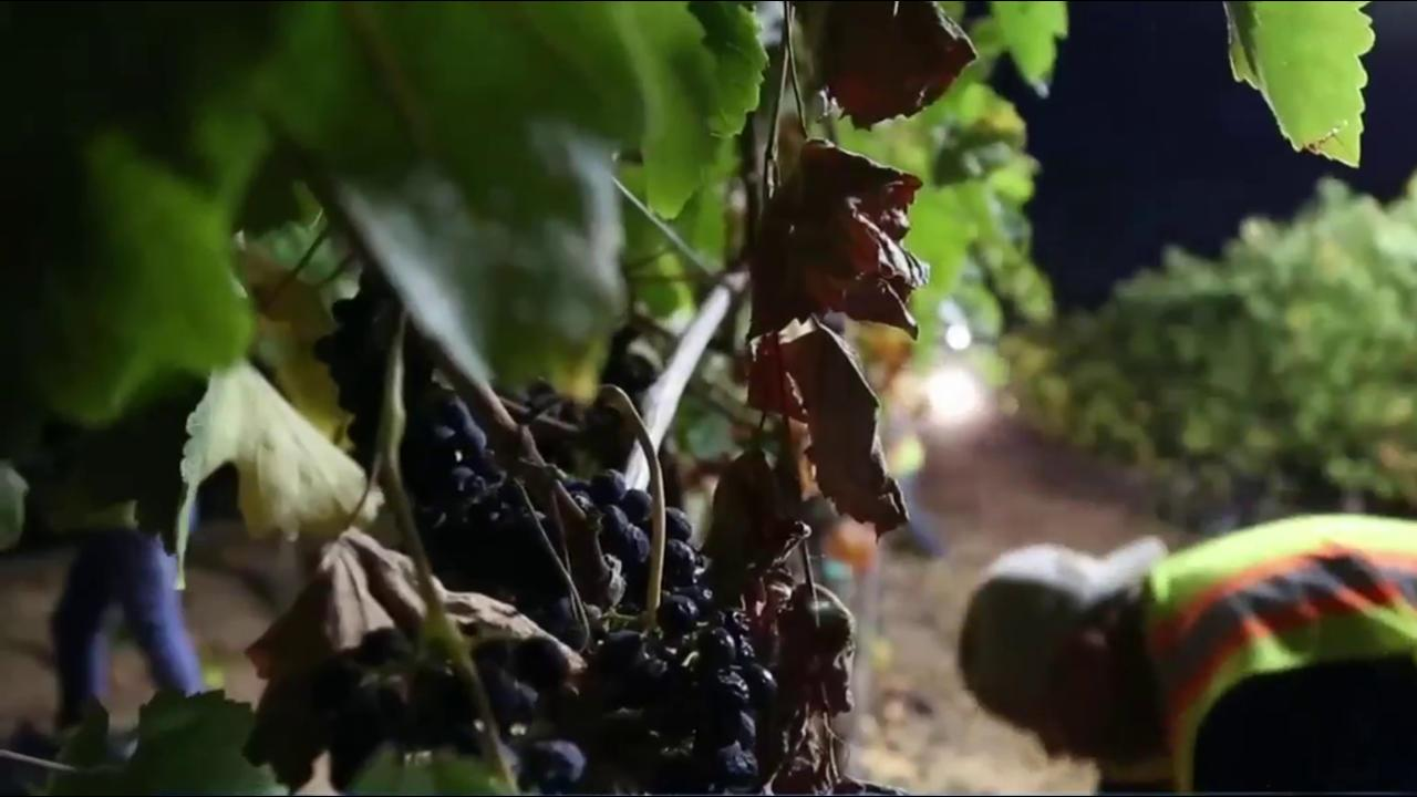 Record High Temperatures Hurt California Wine Harvest