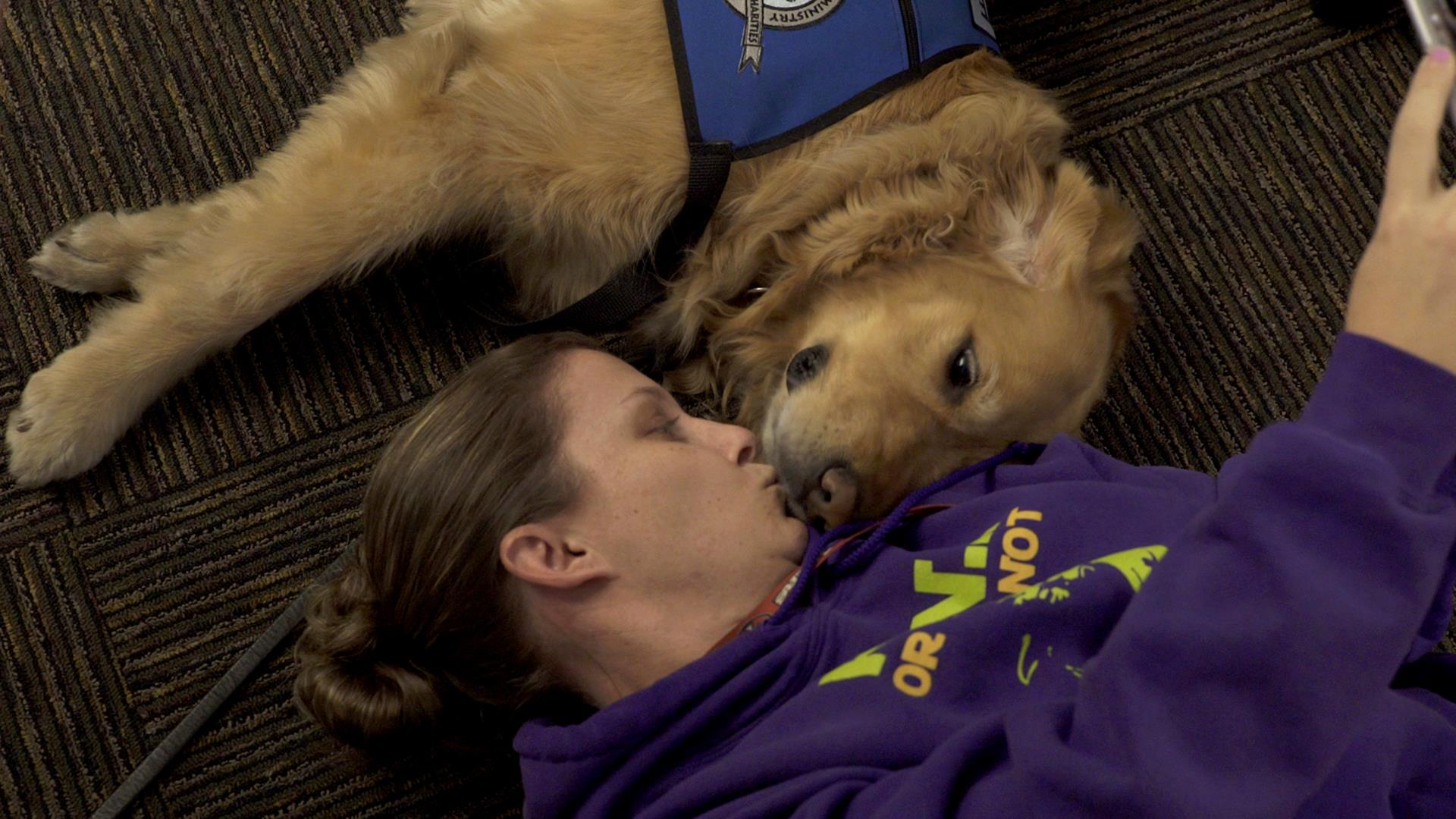 dogs arrive com img wls pets orlando in chicago comfort comforter