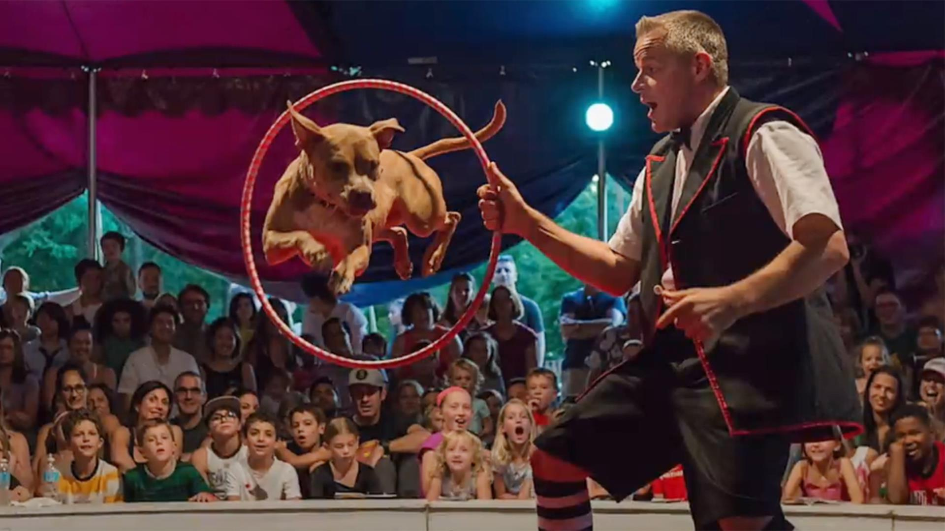 Chicagos Midnight Circus Stars Talented Rescued Pit Bulls