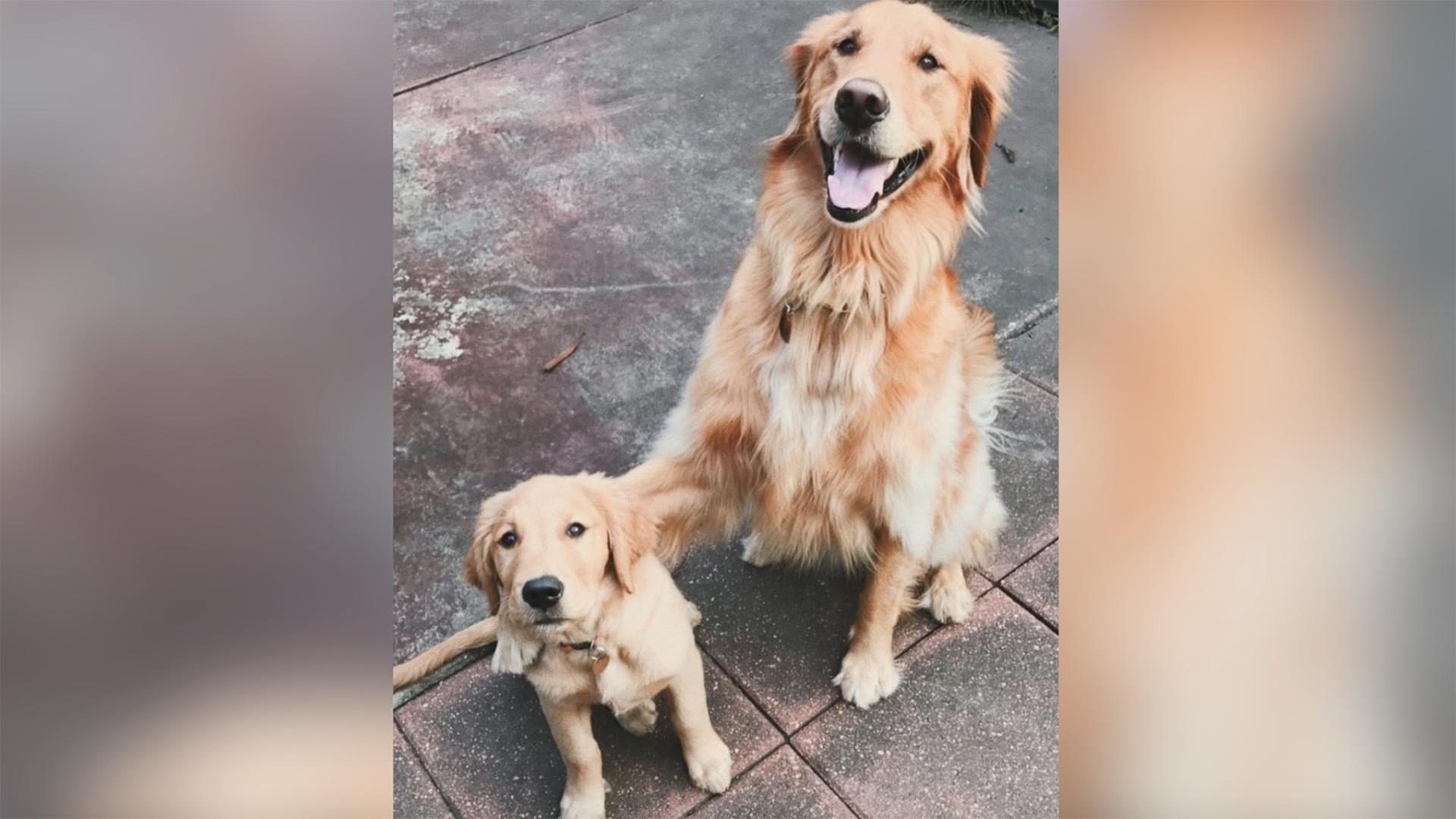 Who S Your Best Friend Dog Wraps Paw Around Dog Bestie