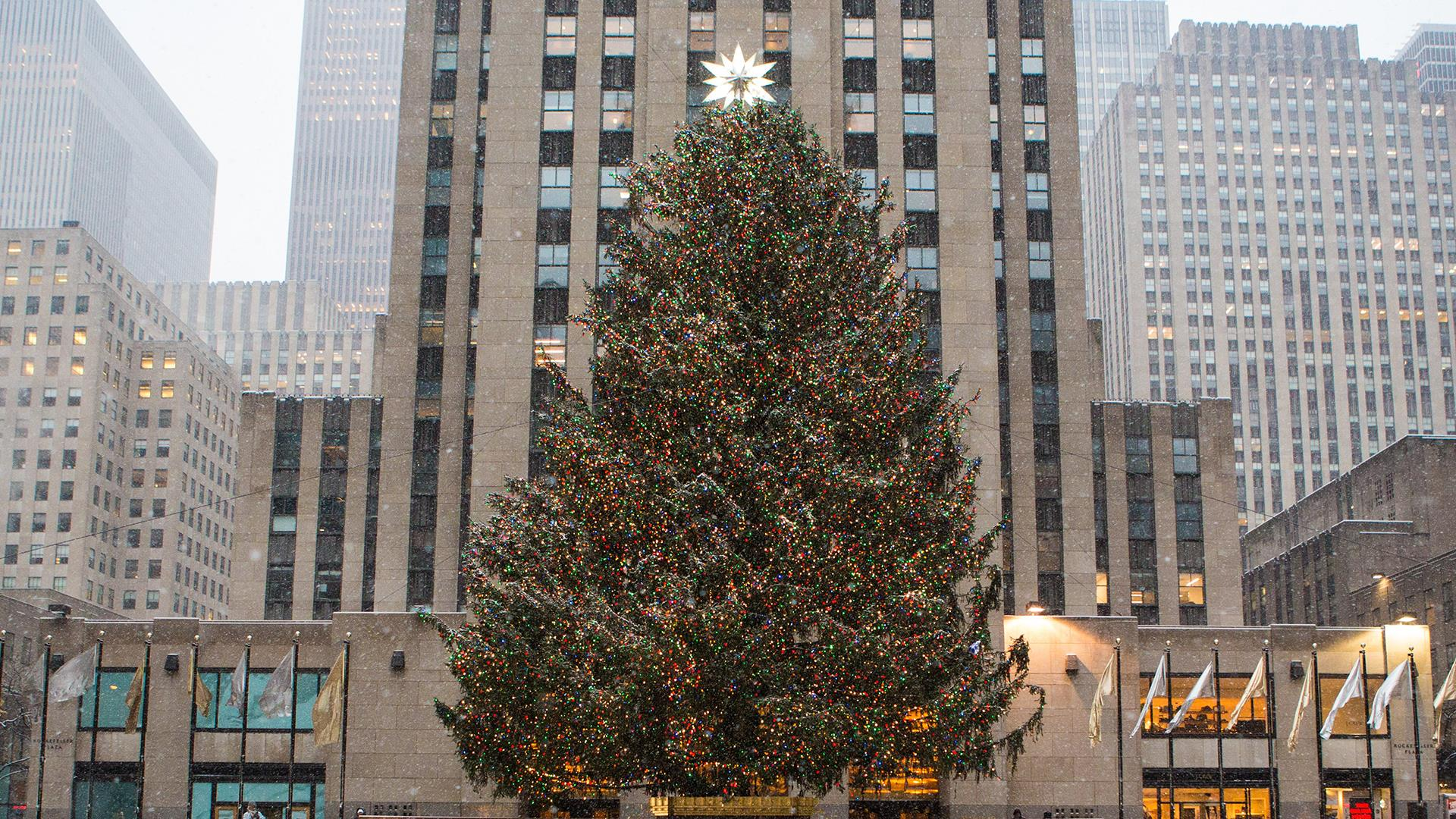 see the story behind this years rockefeller center christmas tree
