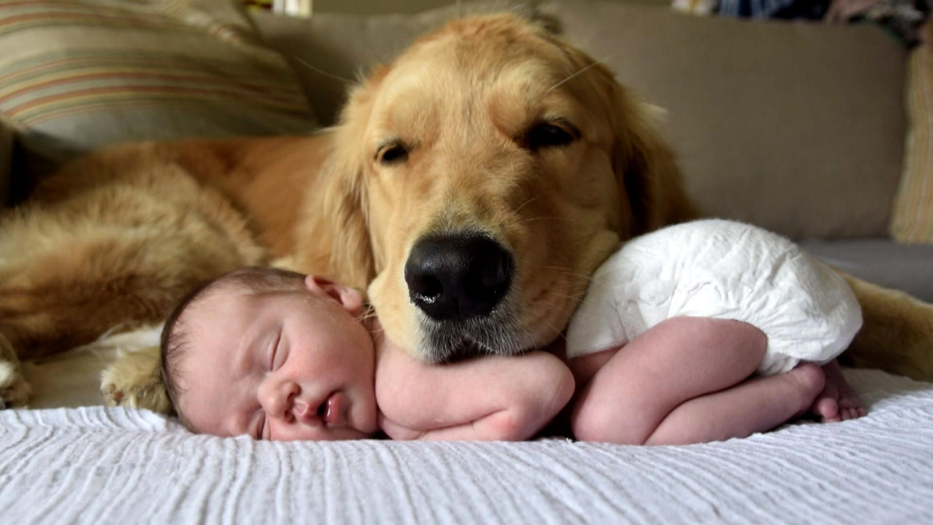 This Golden Retriever And Newborn Baby Girl Are Best Pals