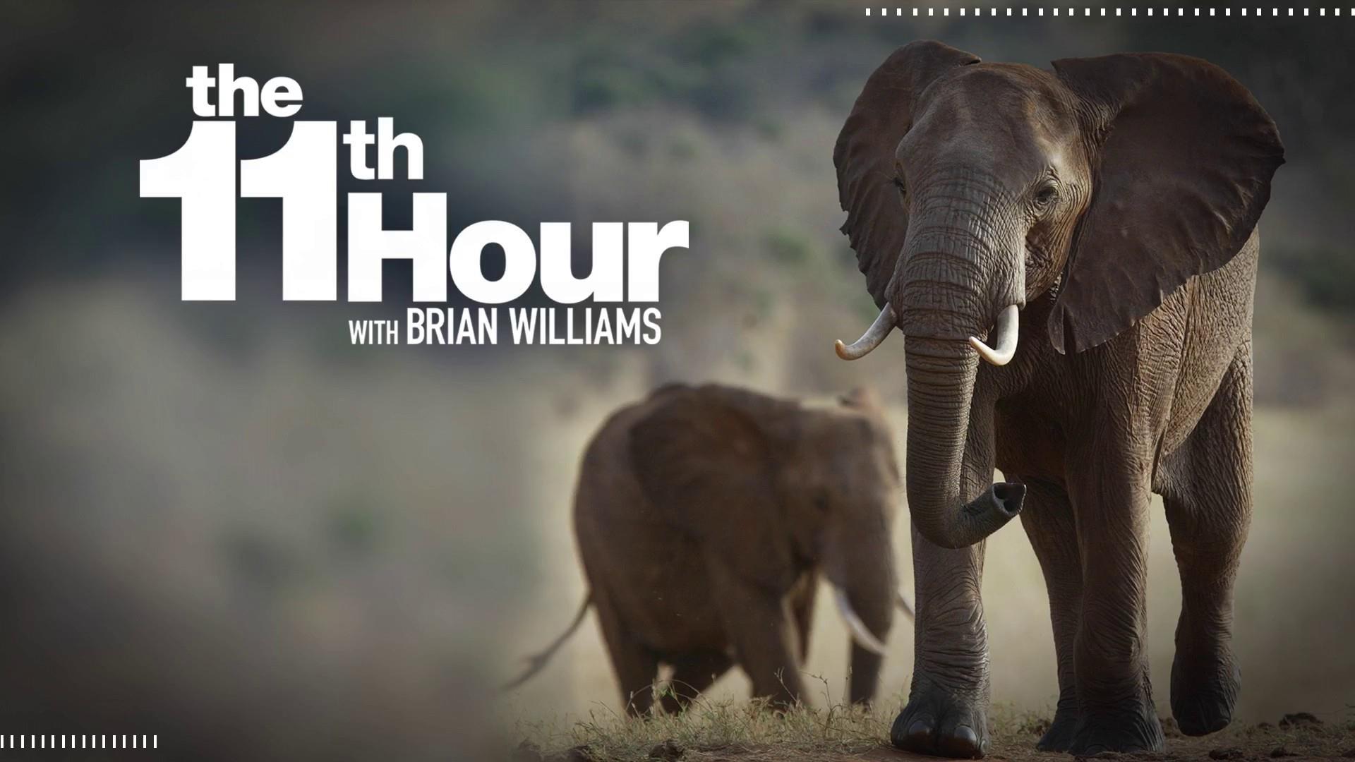 Trump admin. reverses Obama-era ban on elephant trophy imports