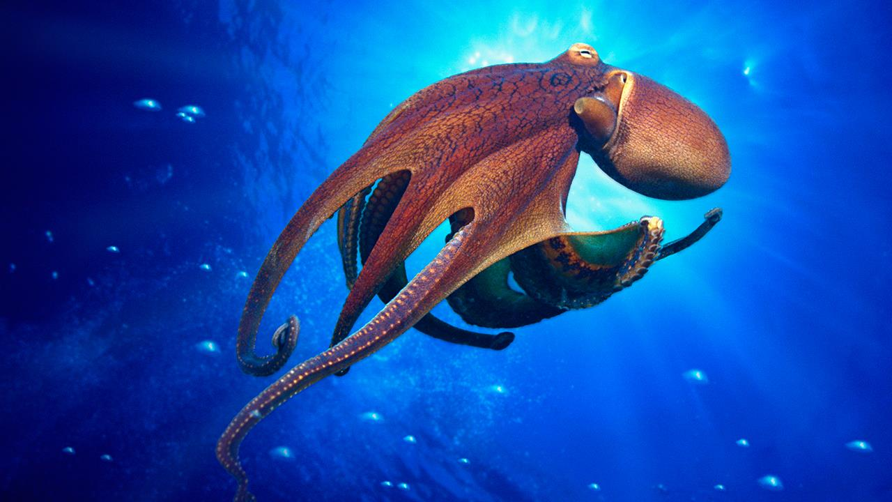 is the octopus an alien