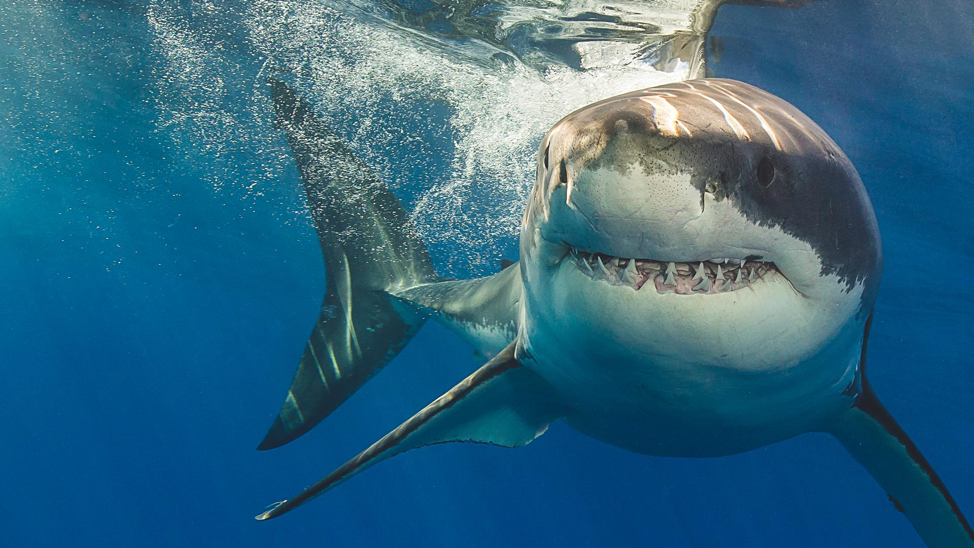 How To Avoid A Shark Attack Shark Safety Tips