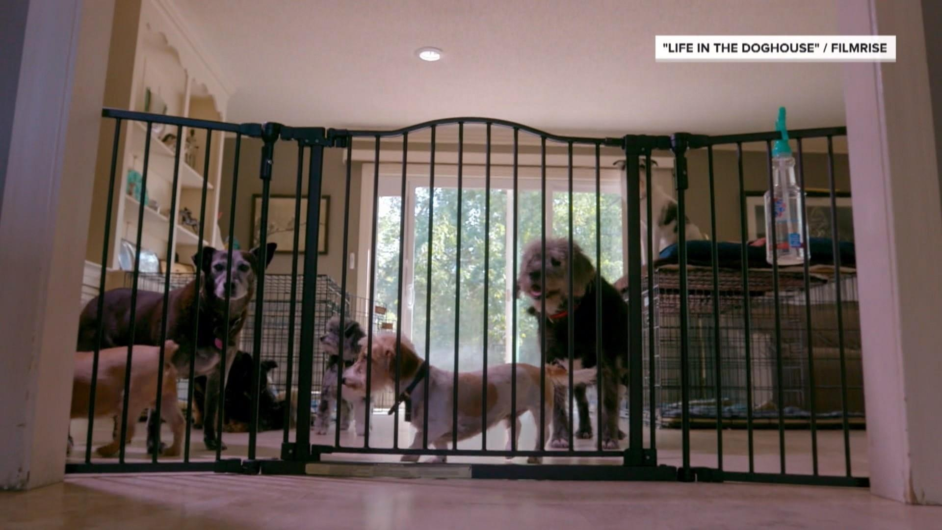 Night In Charleston I Met Katrina Dog >> Meet The Pair Who Saved 11 000 Dogs By Turning Their Home Into A Shelter