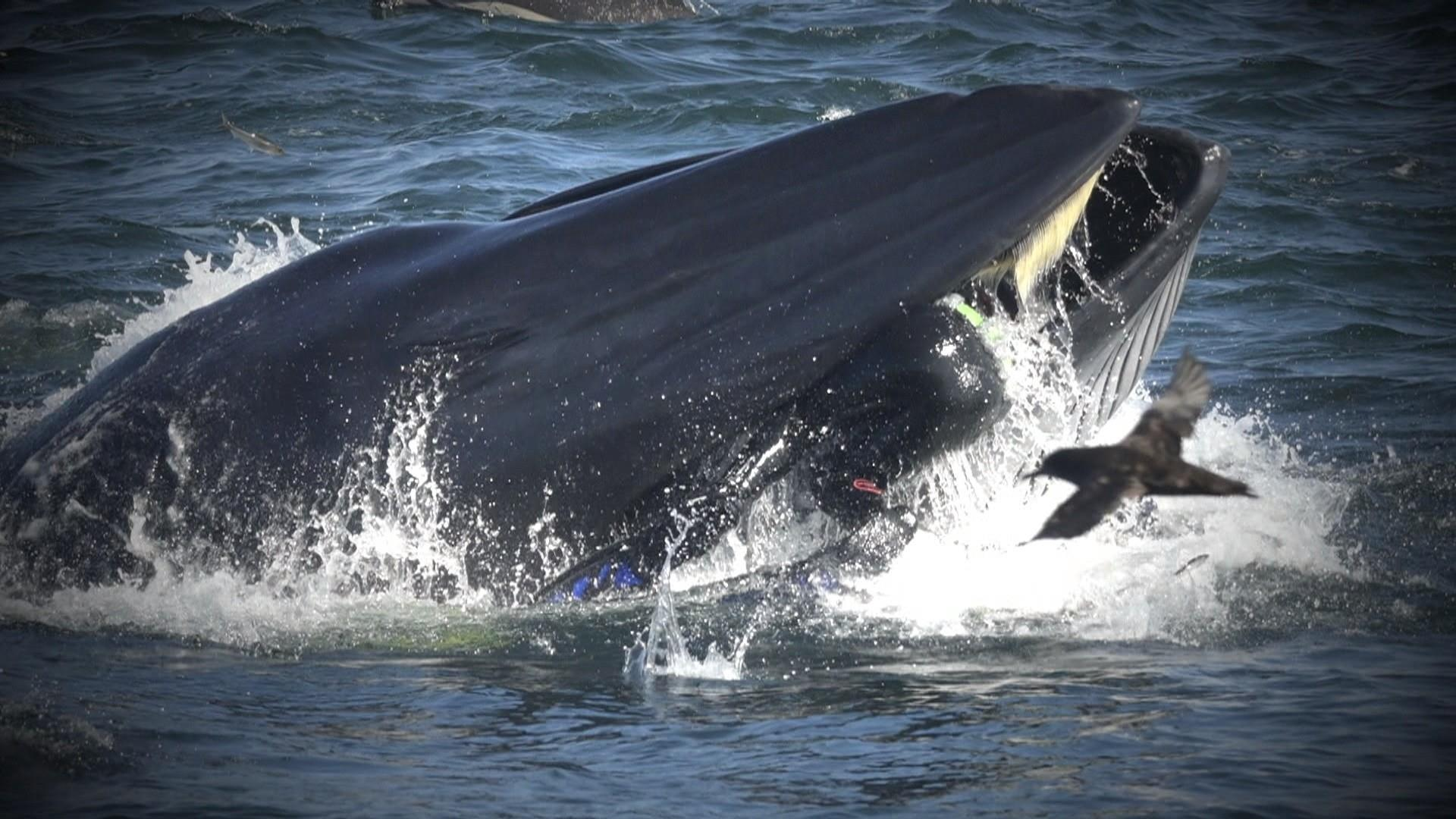 Diver recounts almost being 'swallowed' alive by massive whale