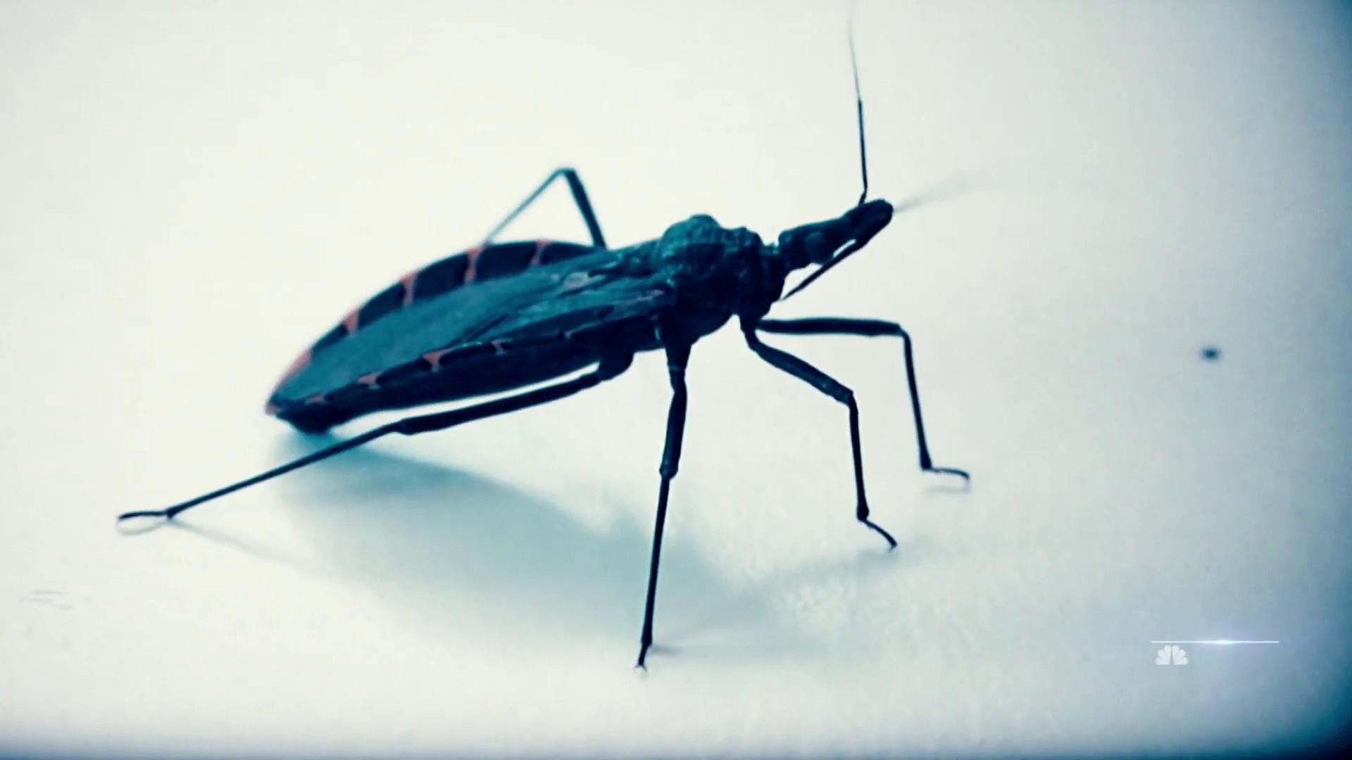 flipboard health officials warn deadly kissing bugs spreading north in u s. Black Bedroom Furniture Sets. Home Design Ideas
