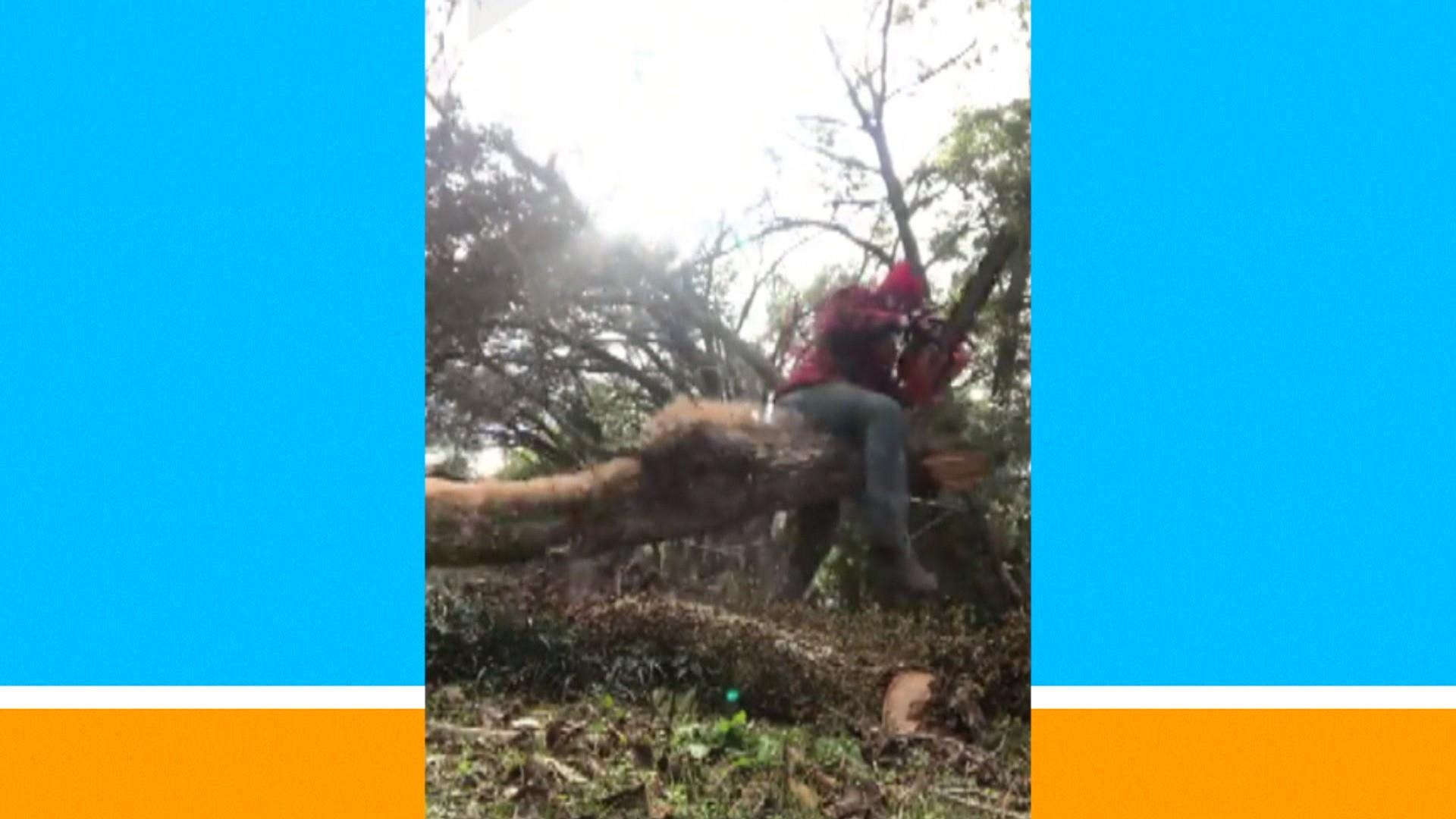Unlucky lumberjack gets painful surprise when cutting down a tree