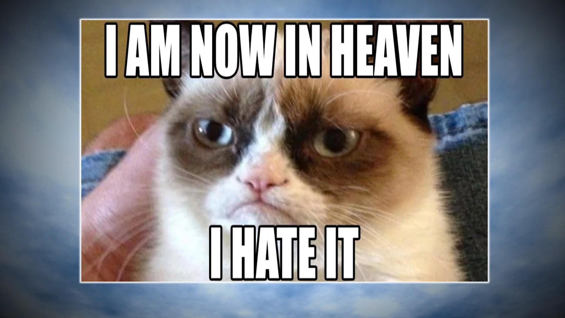 Grumpy Cat: World bids farewell to meme sensation