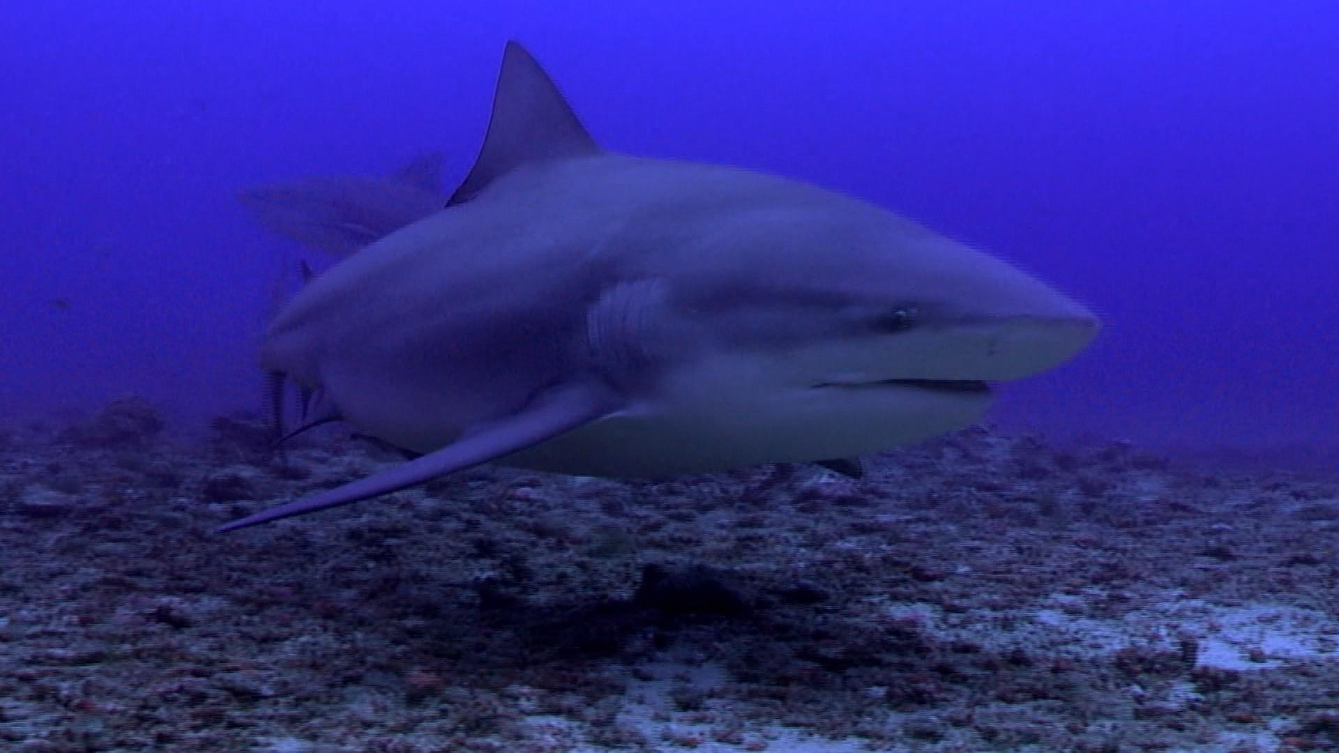 Another swimmer bit by shark in North Carolina