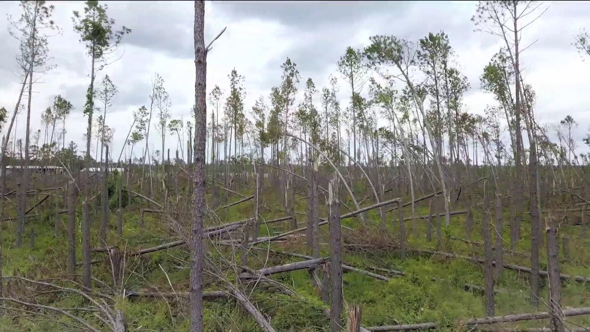 What happens to a forestry community in the aftermath of a disaster?