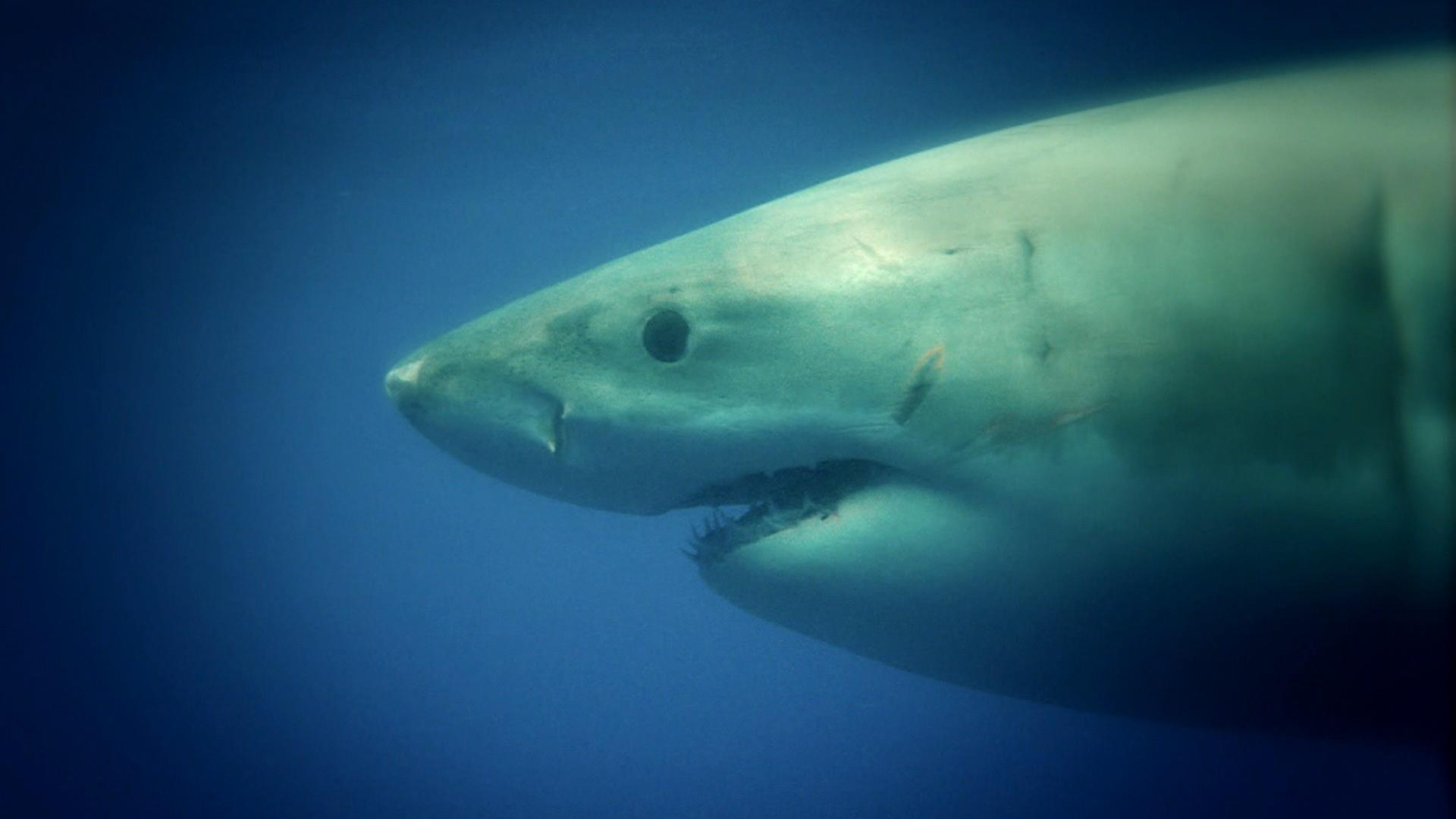 8-year-old attacked by shark off North Carolina coast