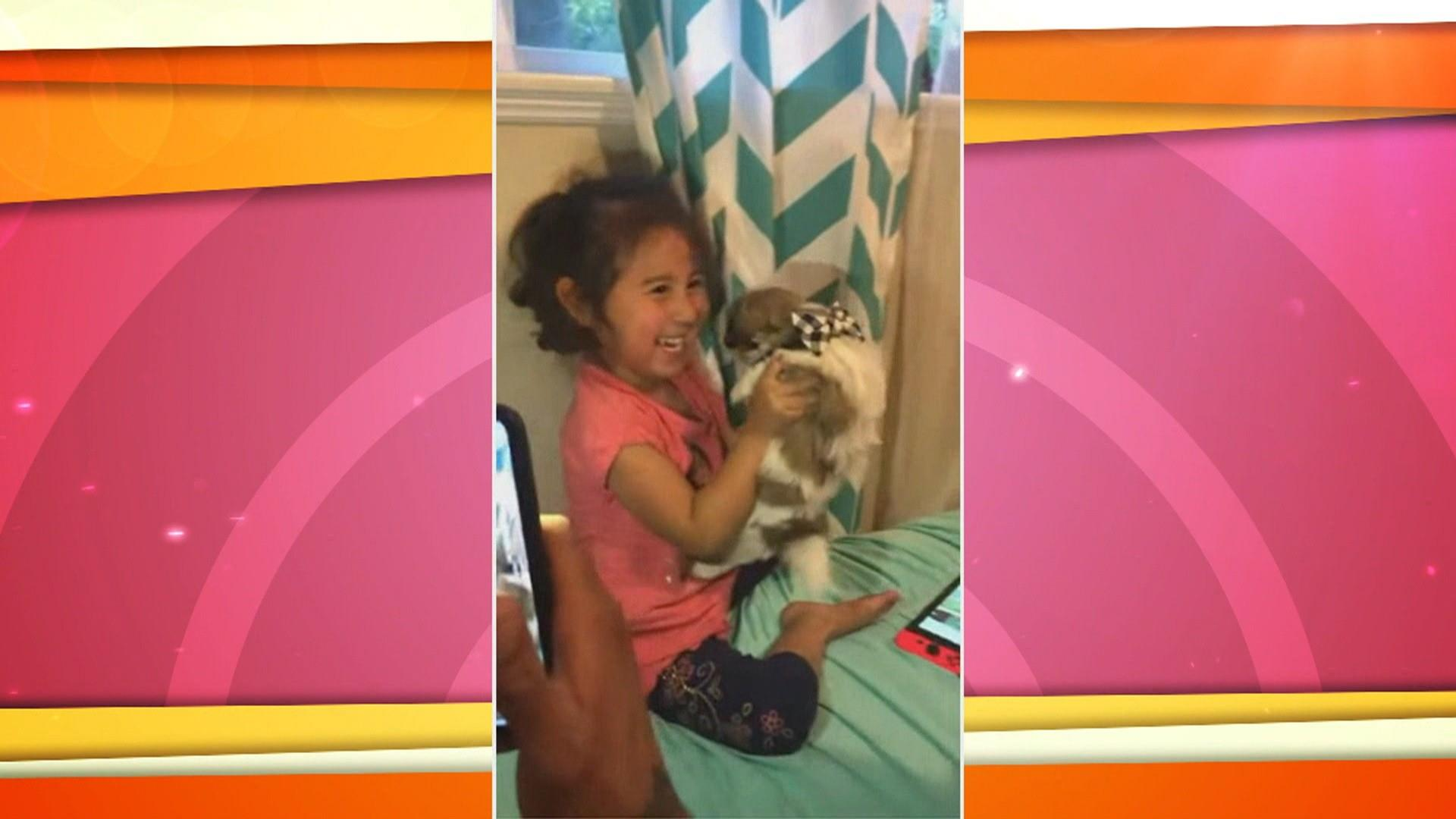 Abracadabra! Little girl makes surprise puppy appear by 'magic'