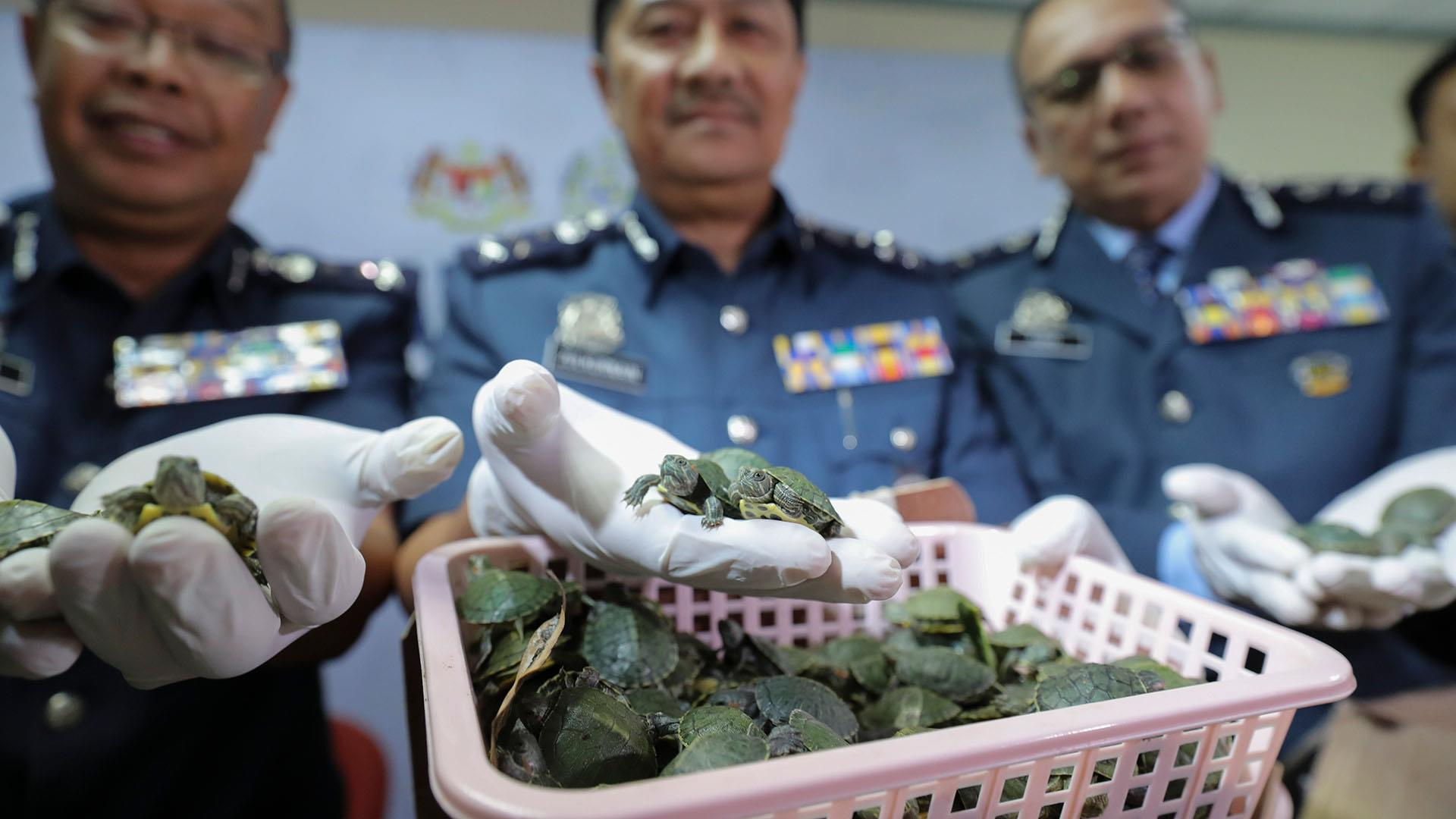 Kuala Lumpur airport officials seize over 5,000 smuggled turtles in luggage