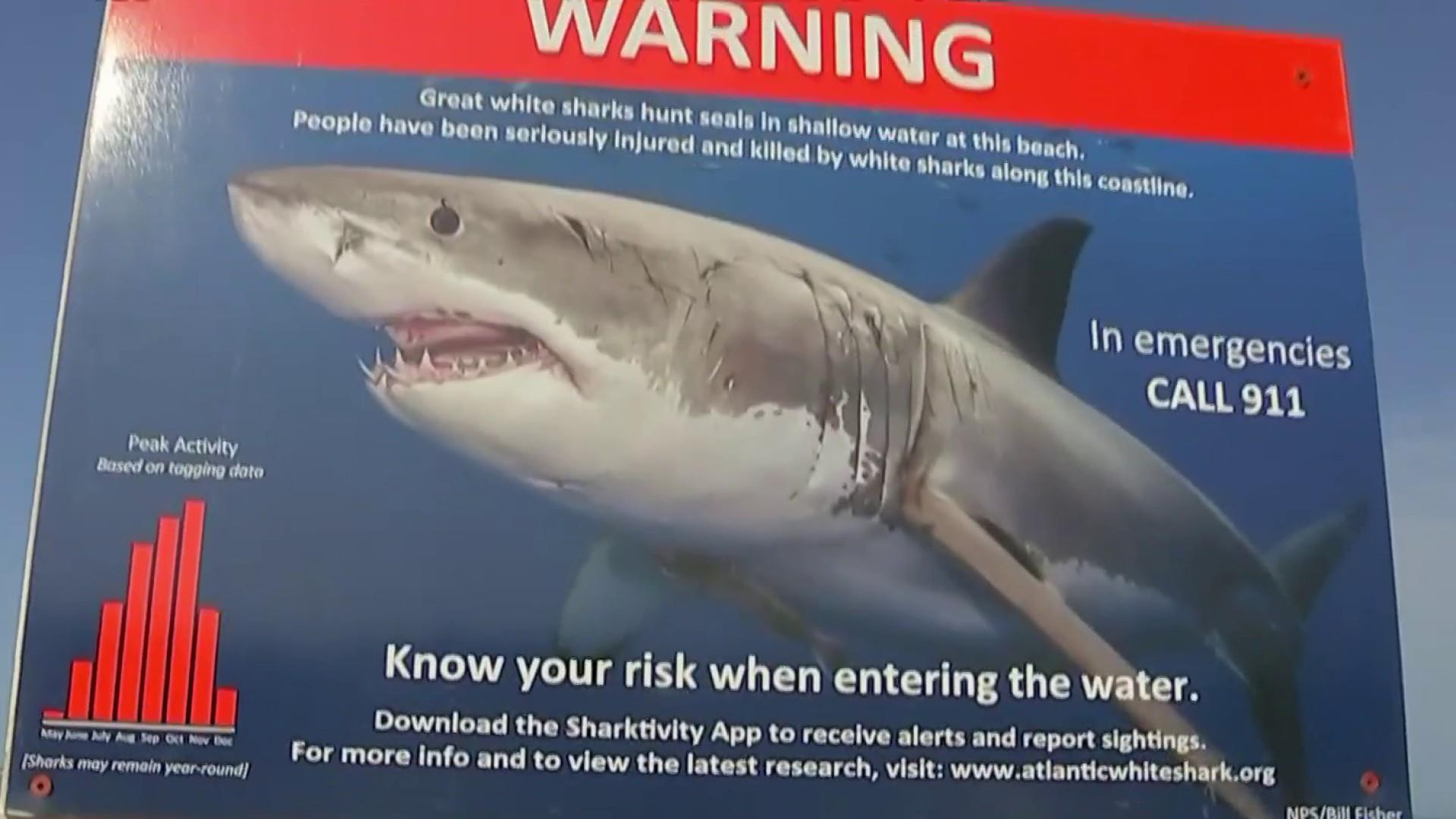 Recent shark incidents causing concerns for beachgoers