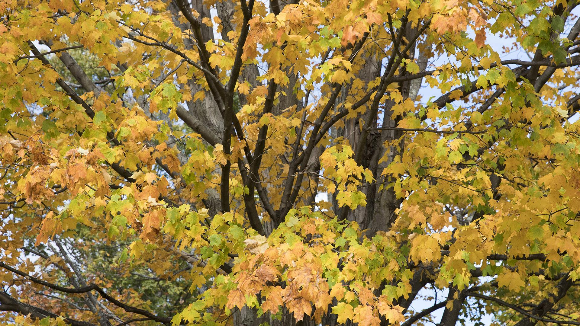 Why Leaves Change Color The Science Of Fall Foliage