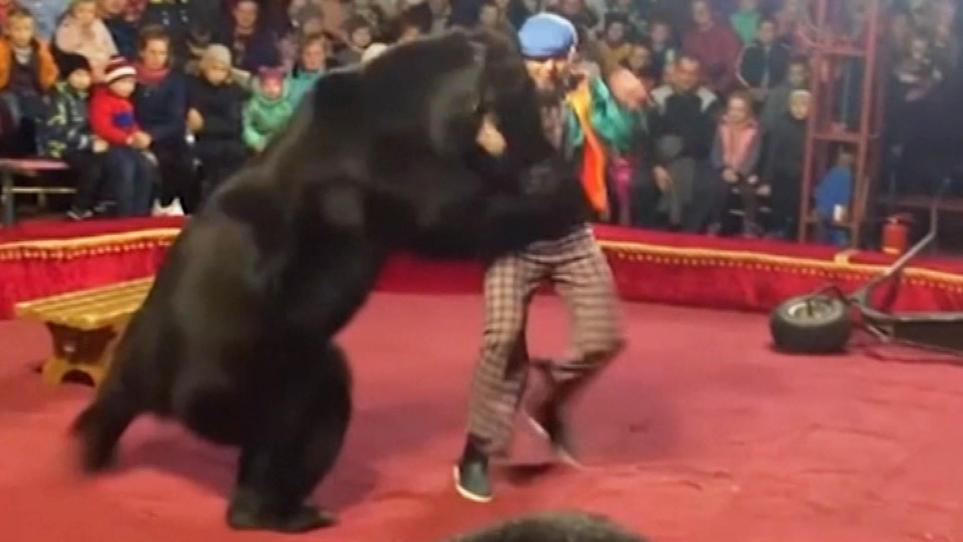 'A panic started' after bear at Russian circus attacks trainer
