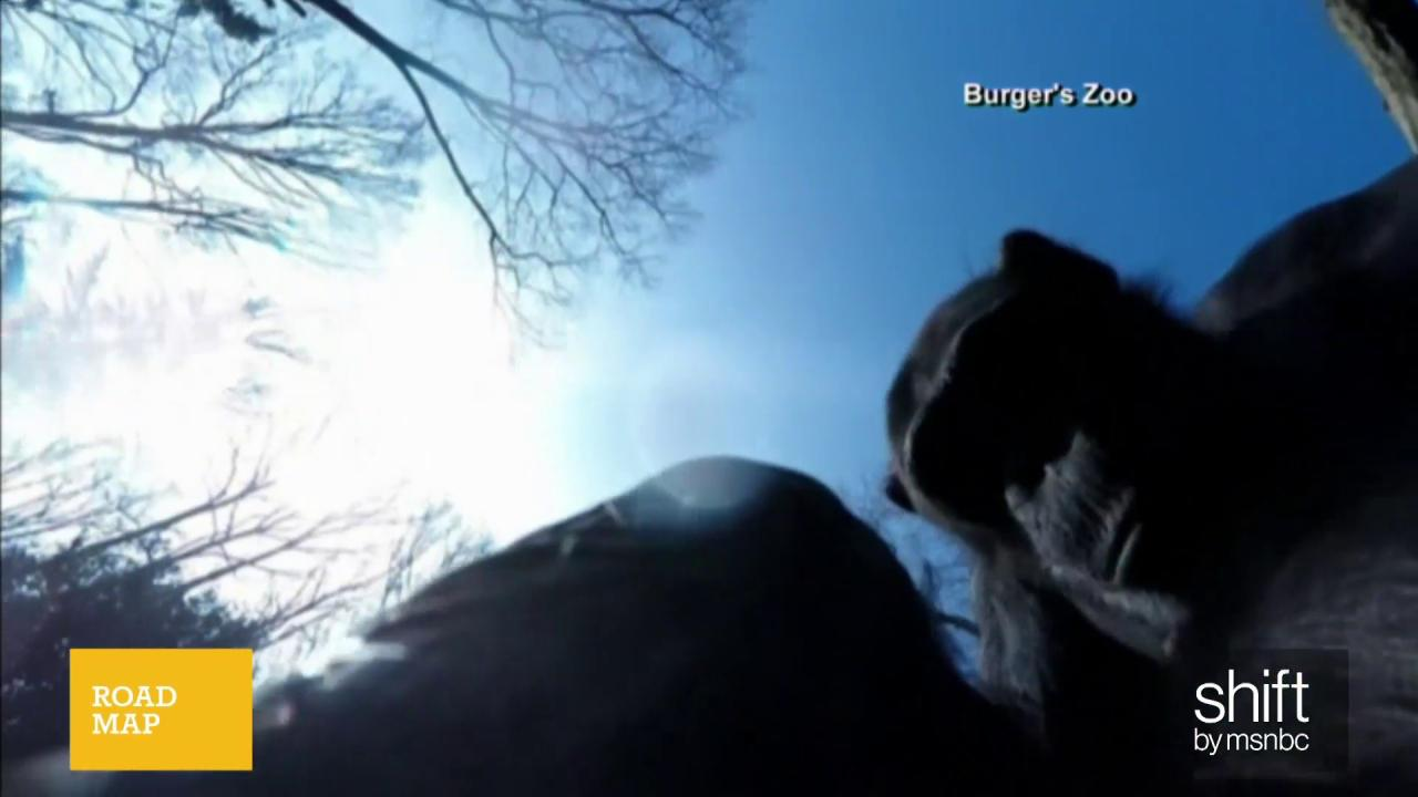 Chimp doesn't take too kindly to drone