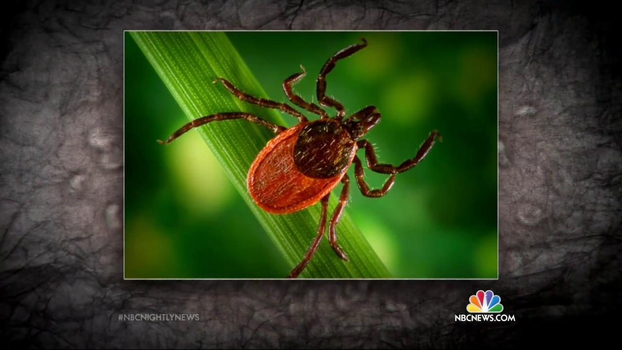 Lyme Disease Is Spreading, Government Research Finds