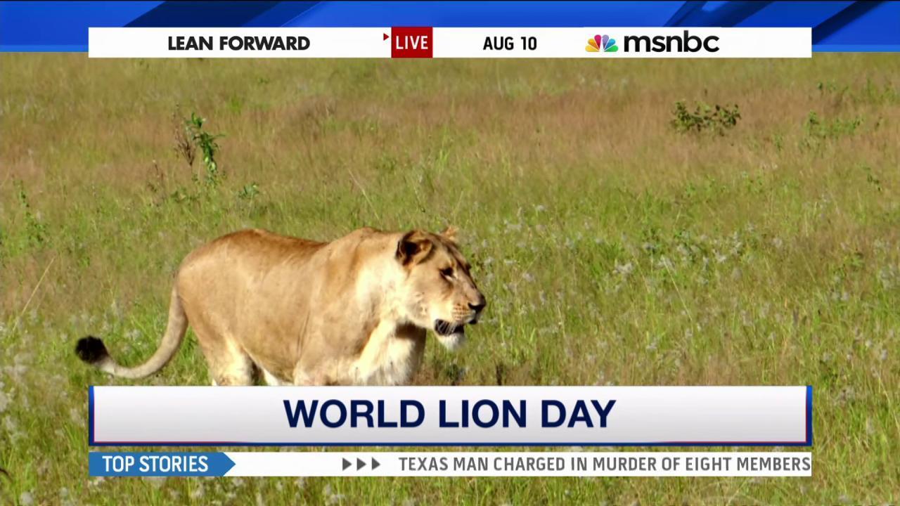 Zimbabwe lifts ban on big game hunting